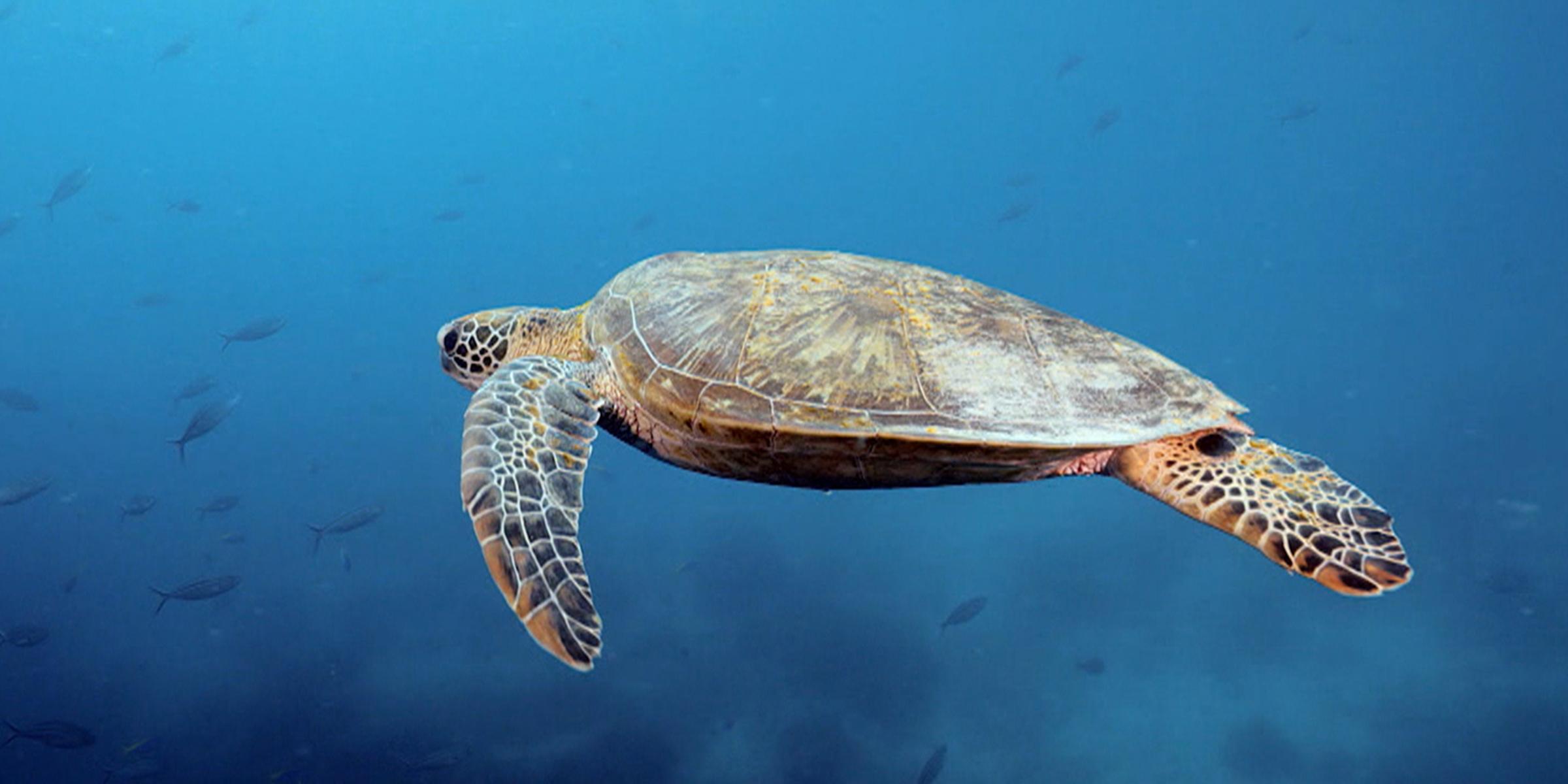 Turtle in the Ocean Weekender Bag