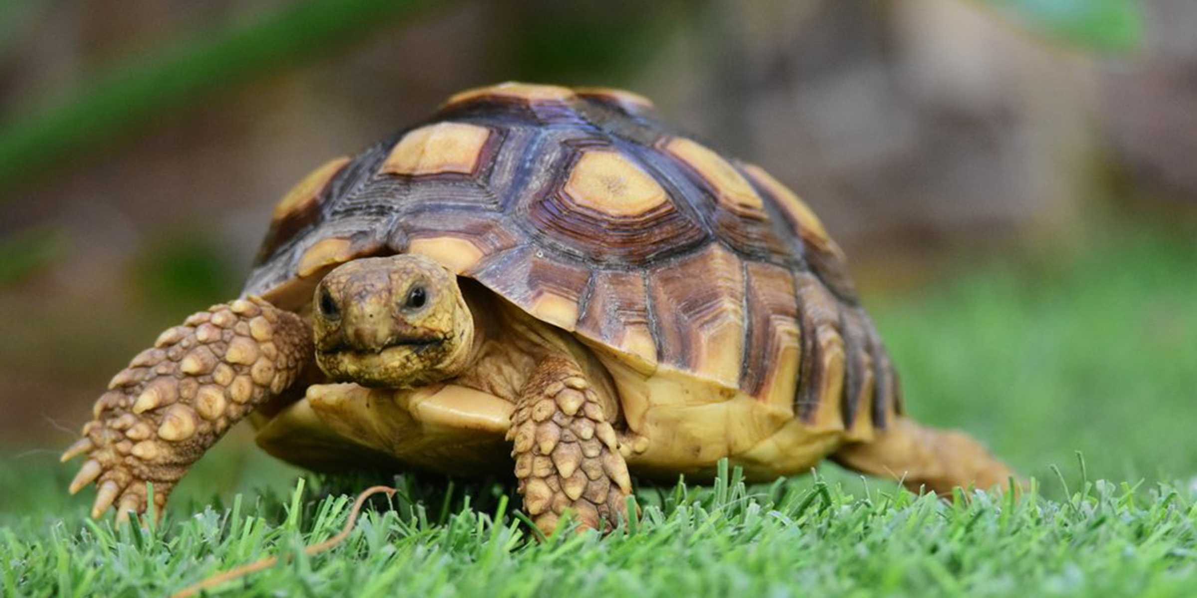 Salmonella outbreak across 13 states linked to pet turtles