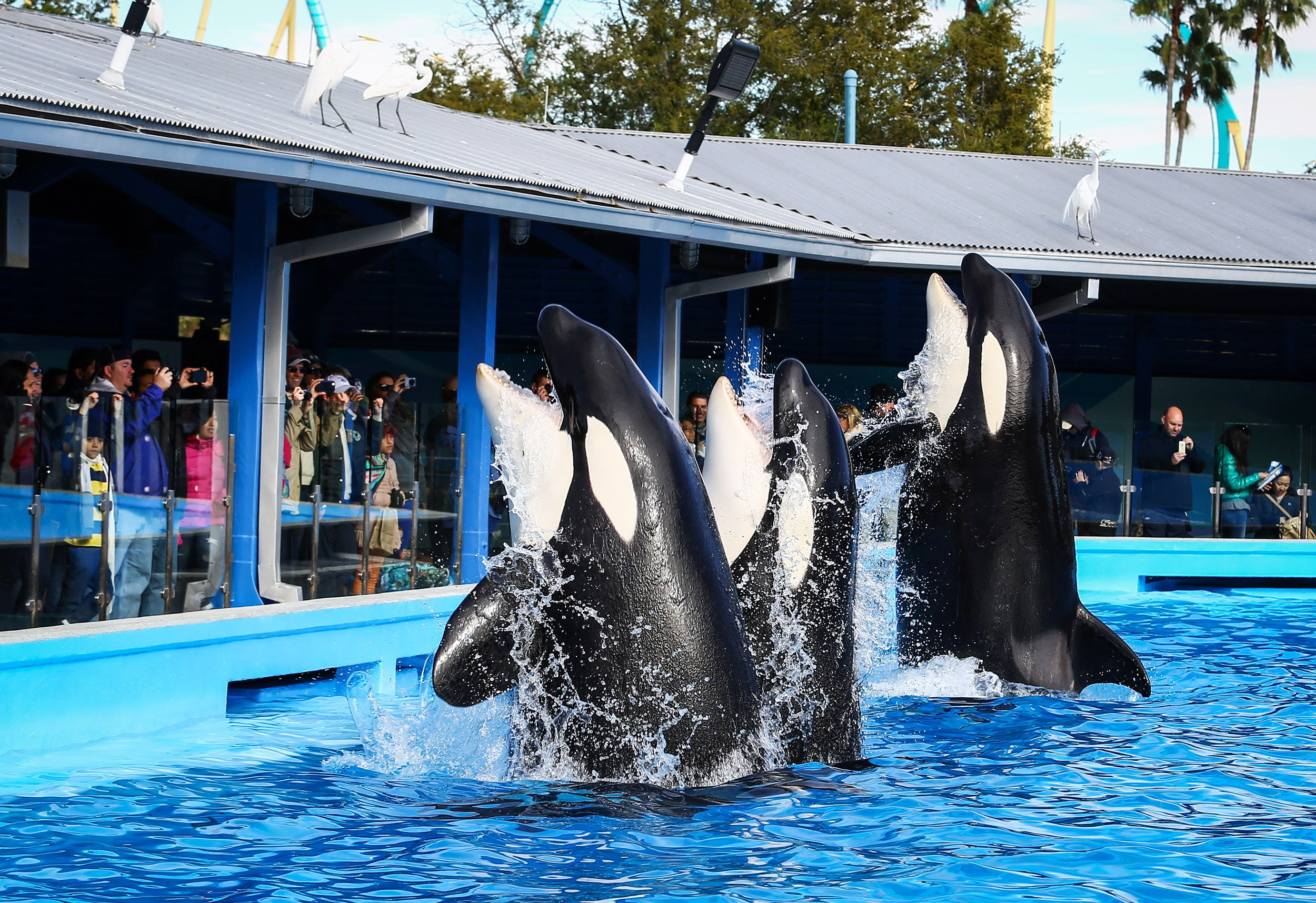 SeaWorld Orlando to debut new killer-whale show at the start of 2020