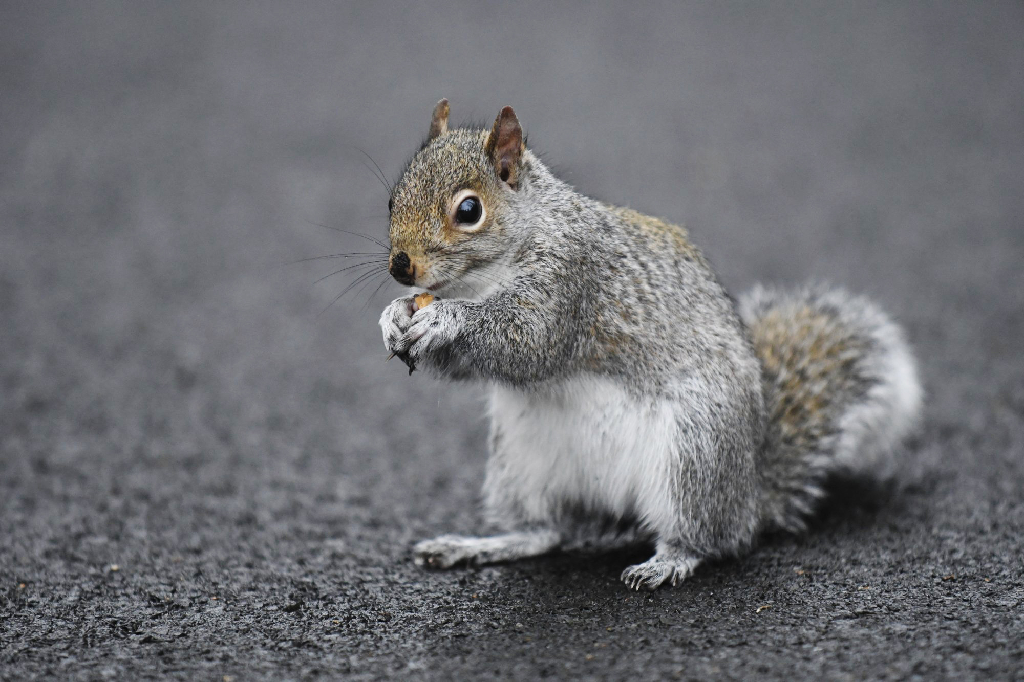 A squirrel trashed home of family on vacation, and insurance won't pay