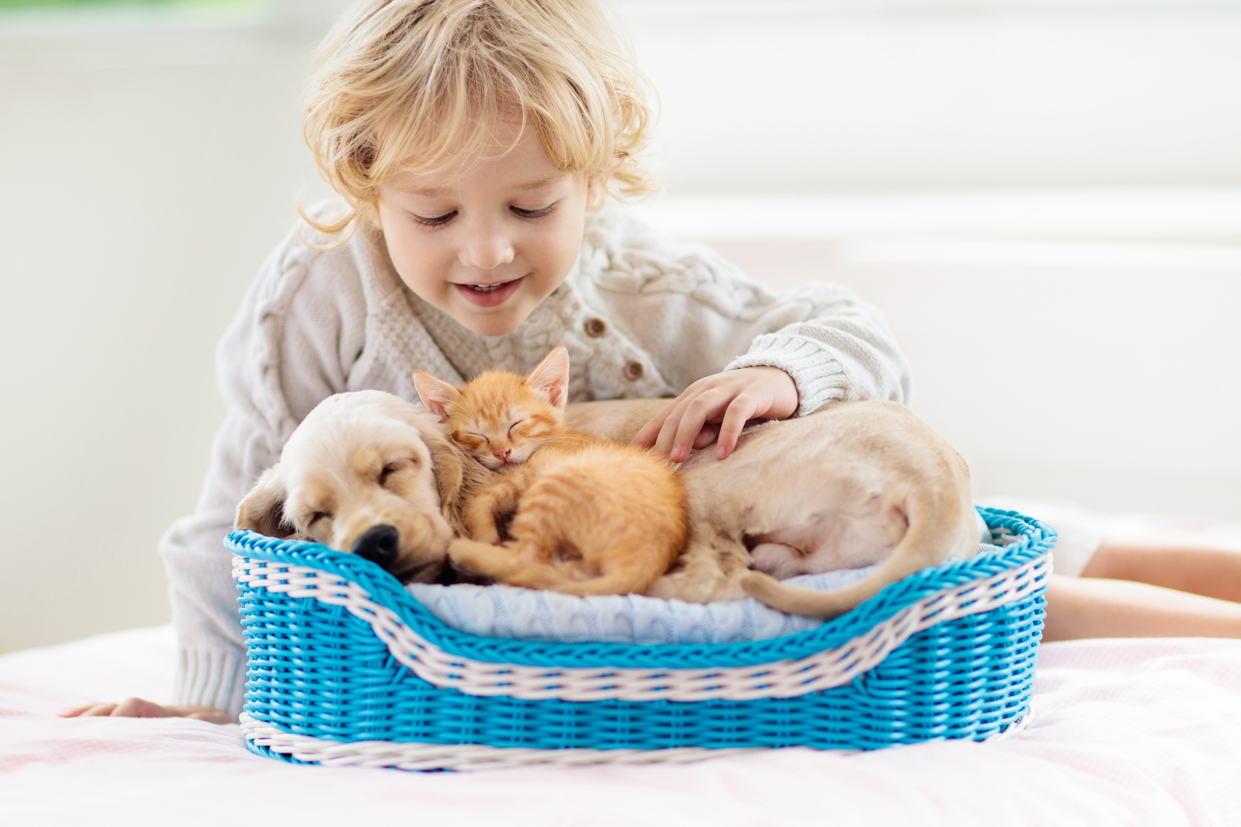 15 Best Pet Products For Dogs And Cats For Safety Health And Fun