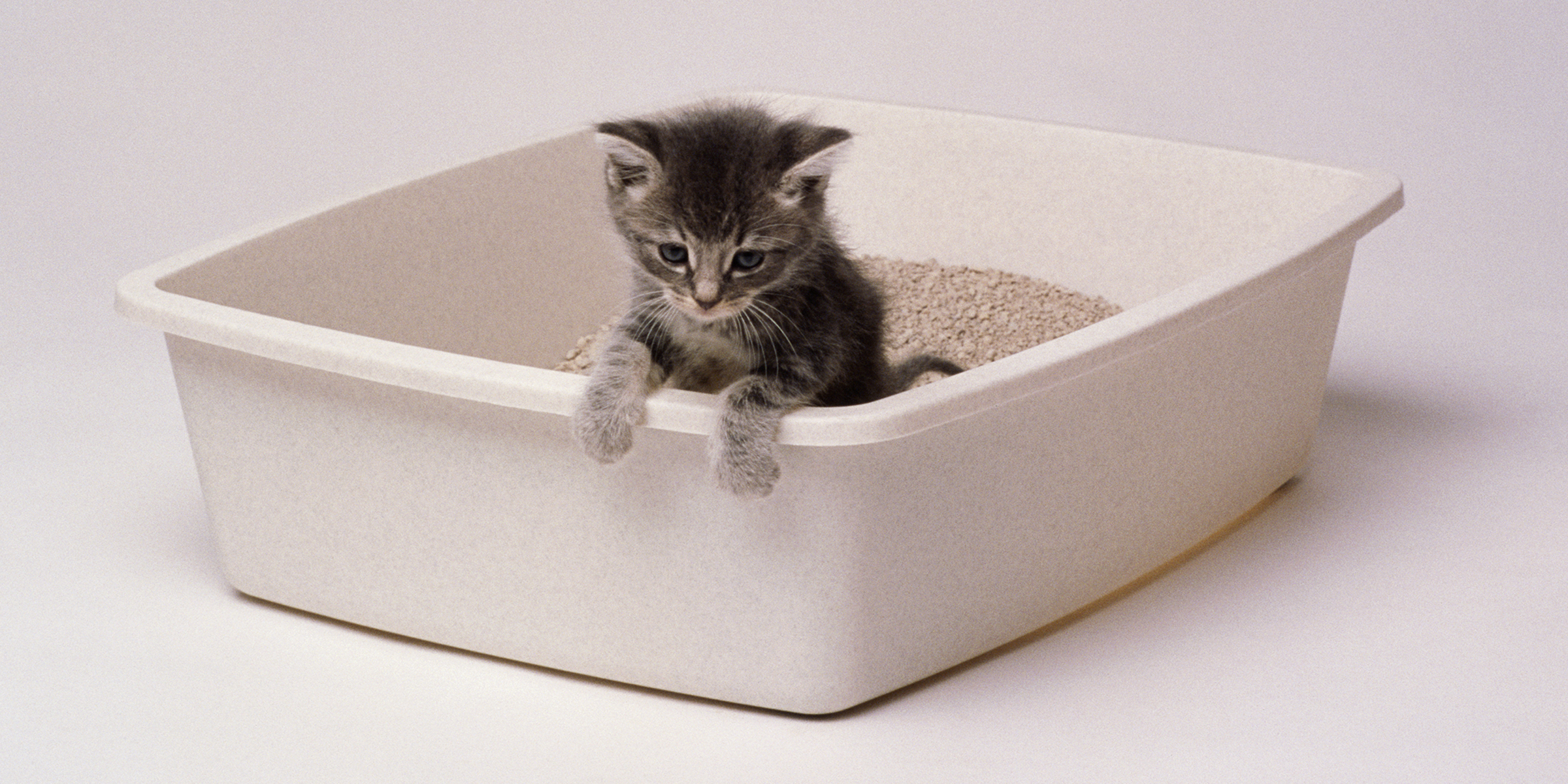 The Best Cat Litters Of 2020
