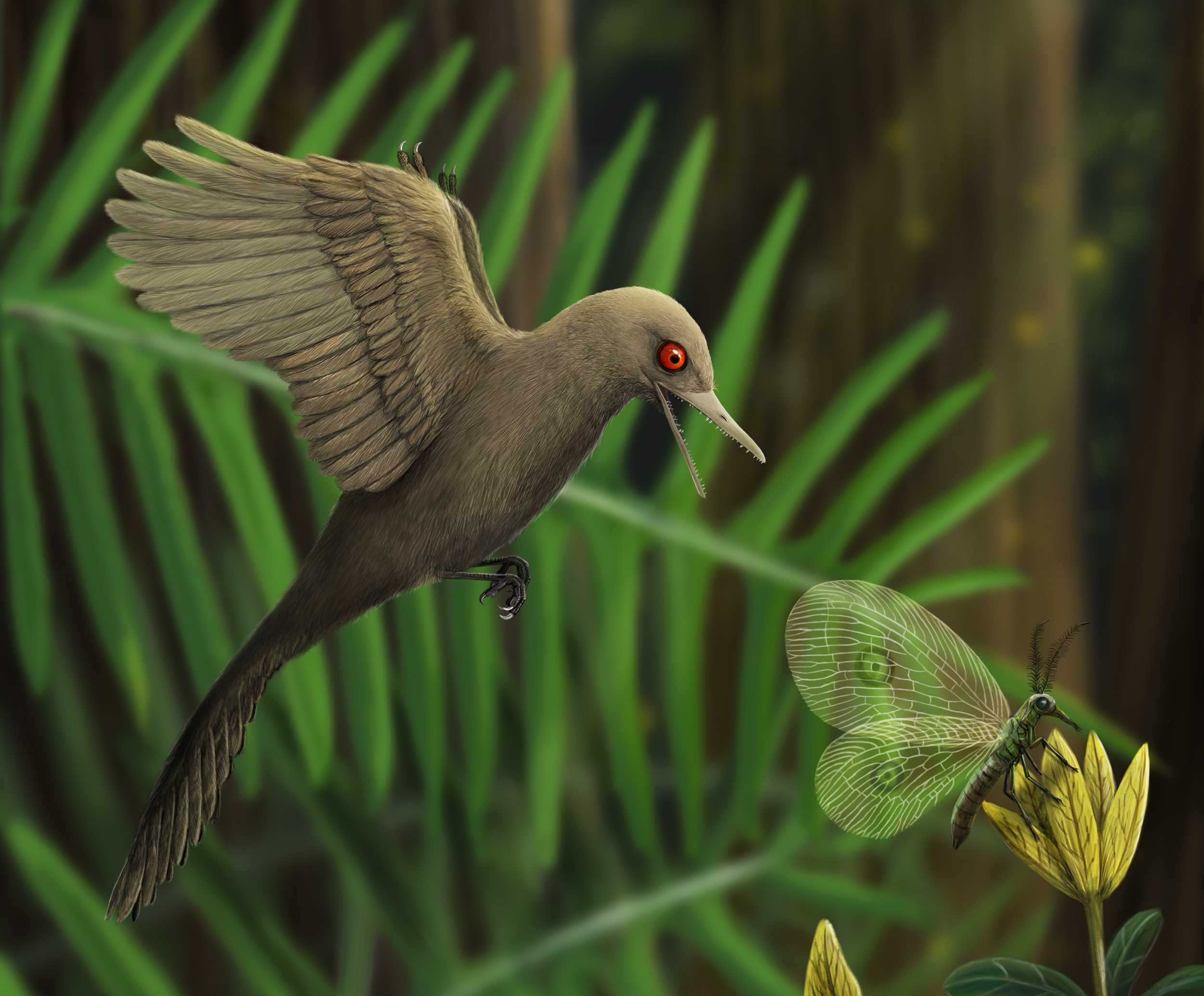 An artistic rendering of Oculudentavis imagining what it looked like preying on an insect. (HAN Zhixin / Los Angeles Natural History Museum)