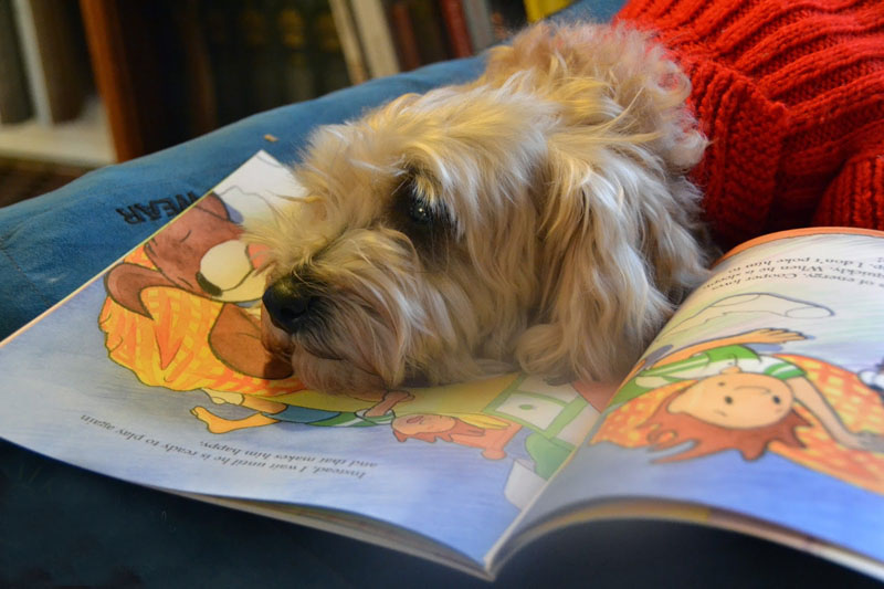 A dog rests on a picture book.