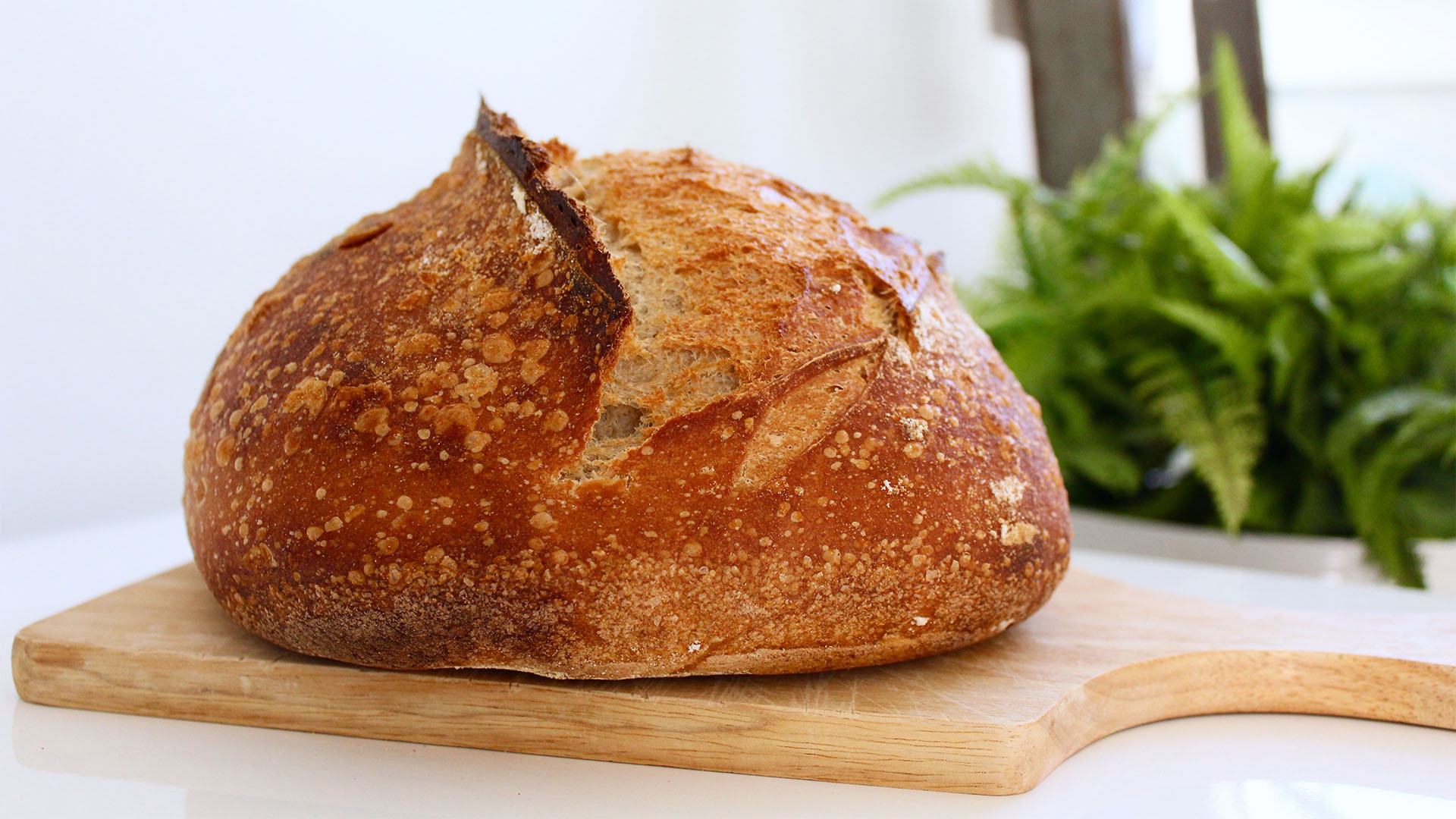 Make freshly baked bread with everyday ingredients