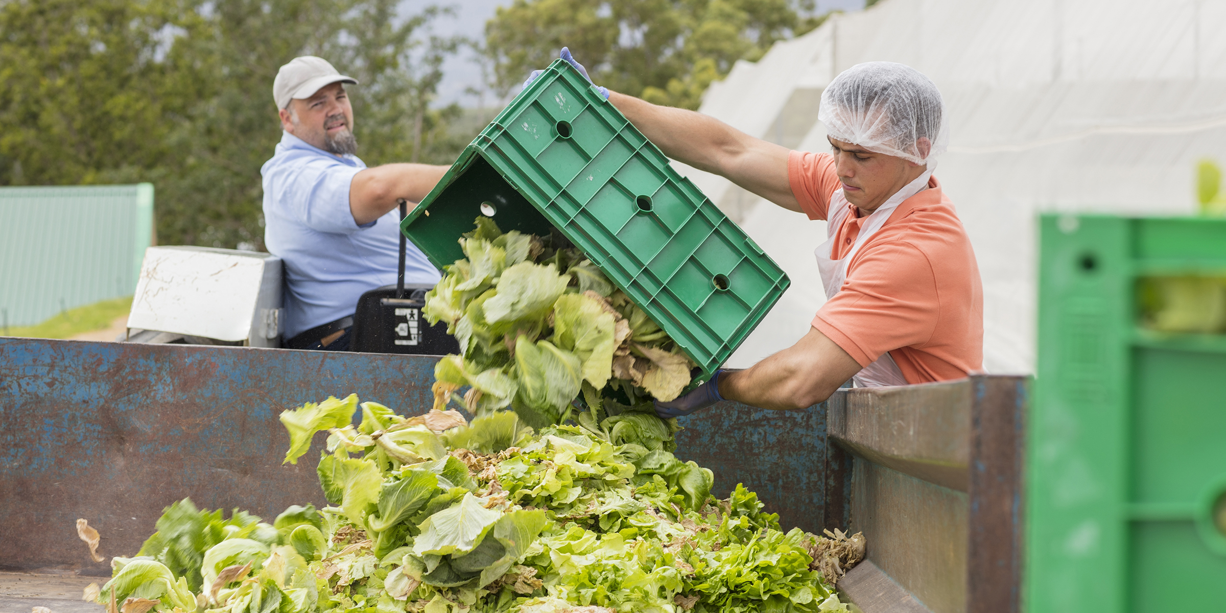 Why farmers are throwing away food amid rising demand for food
