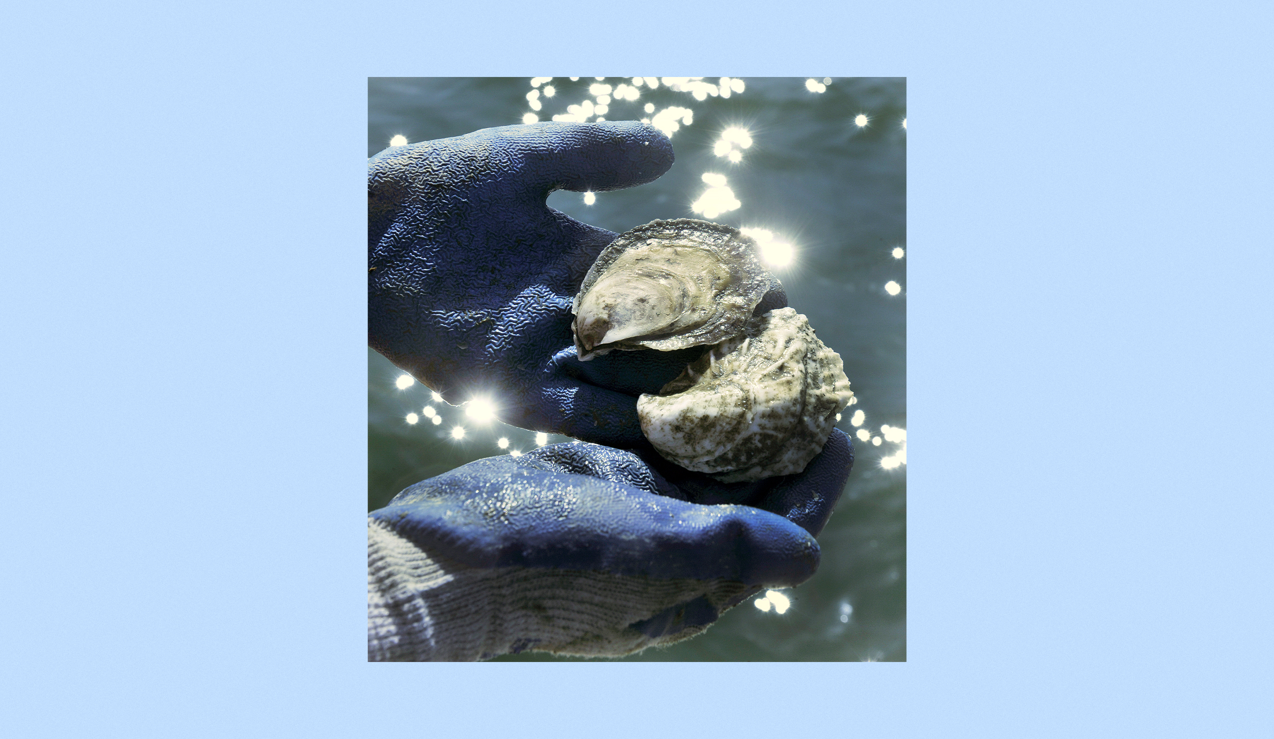 Want-to-help-save-the-oyster-industry?-Eat-bigger-ones,-some-farmers-and-chefs-say.
