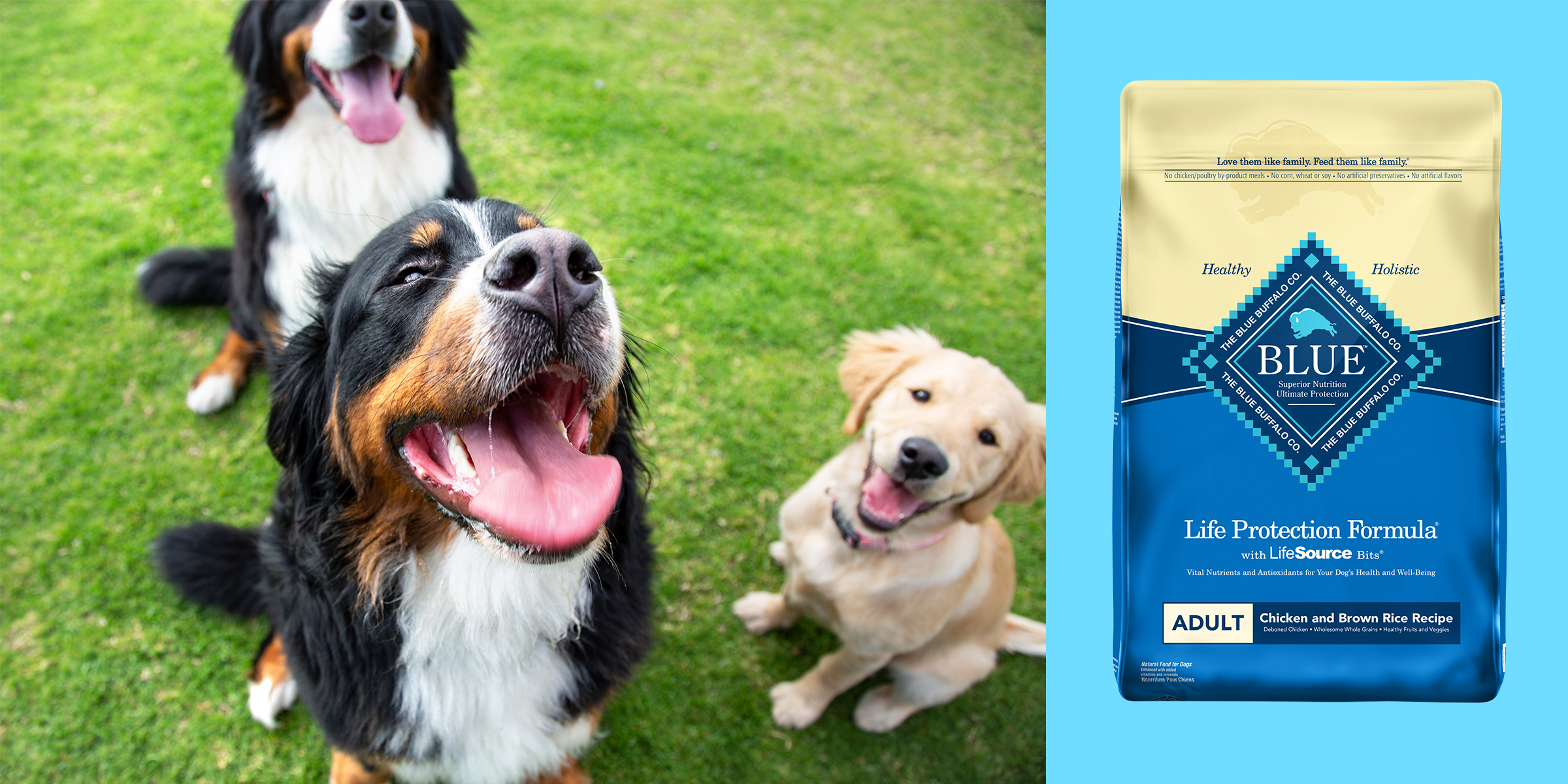 Best Dry Dog Food According To Experts