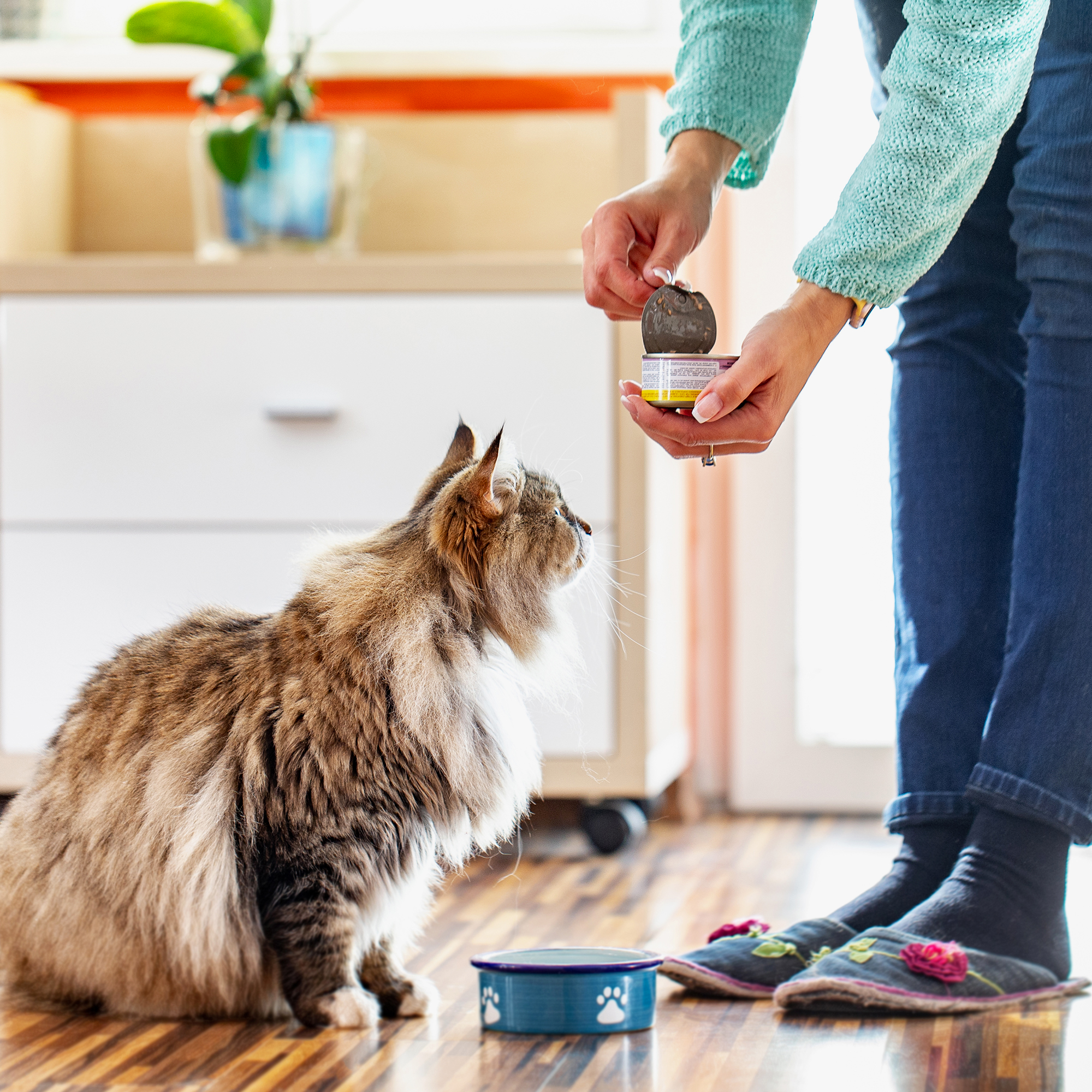 Picture of: How To Buy The Best Cat Food According To Veterinarians
