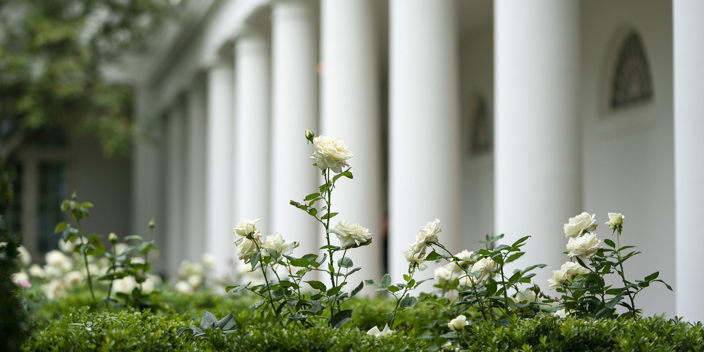 First Lady Melania Trump Unveils Renewed White House Rose Garden