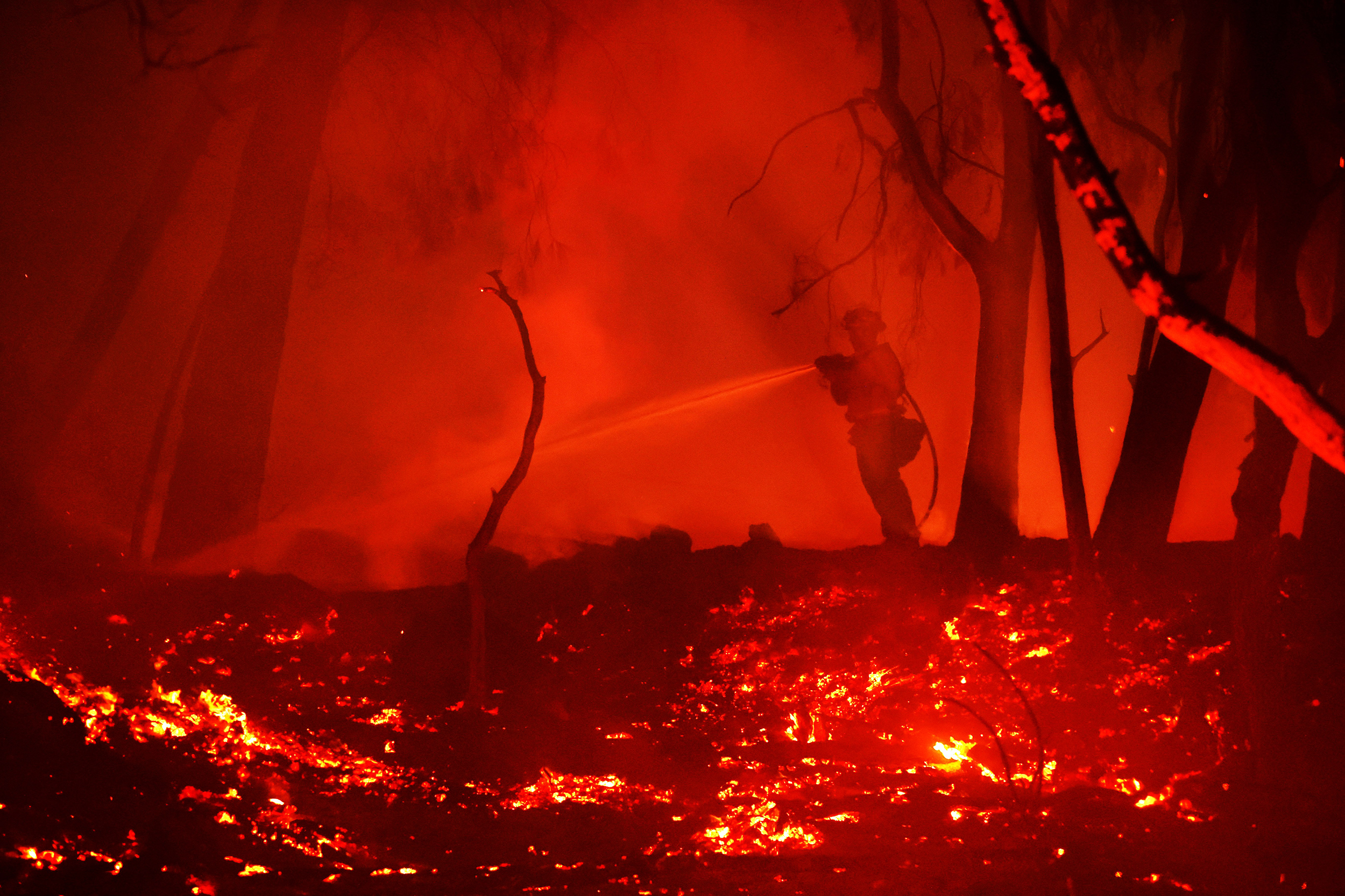 Fire-experts-say-mismanaged,-choked-forests-need-to-be-cleared-out