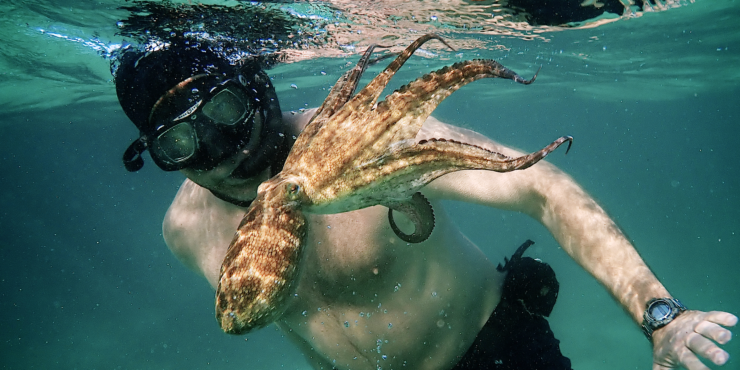 """My Octopus Teacher"""" is the antidote to our pandemic year"""