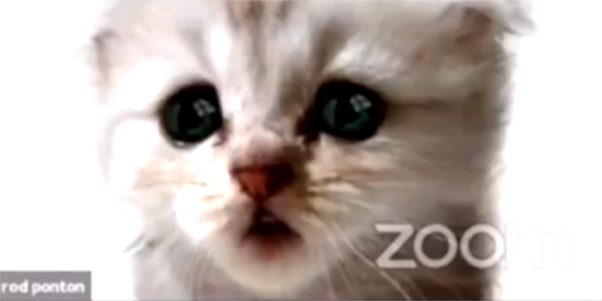 210209-lawyer-cat-zoom-filter-al-1456_77