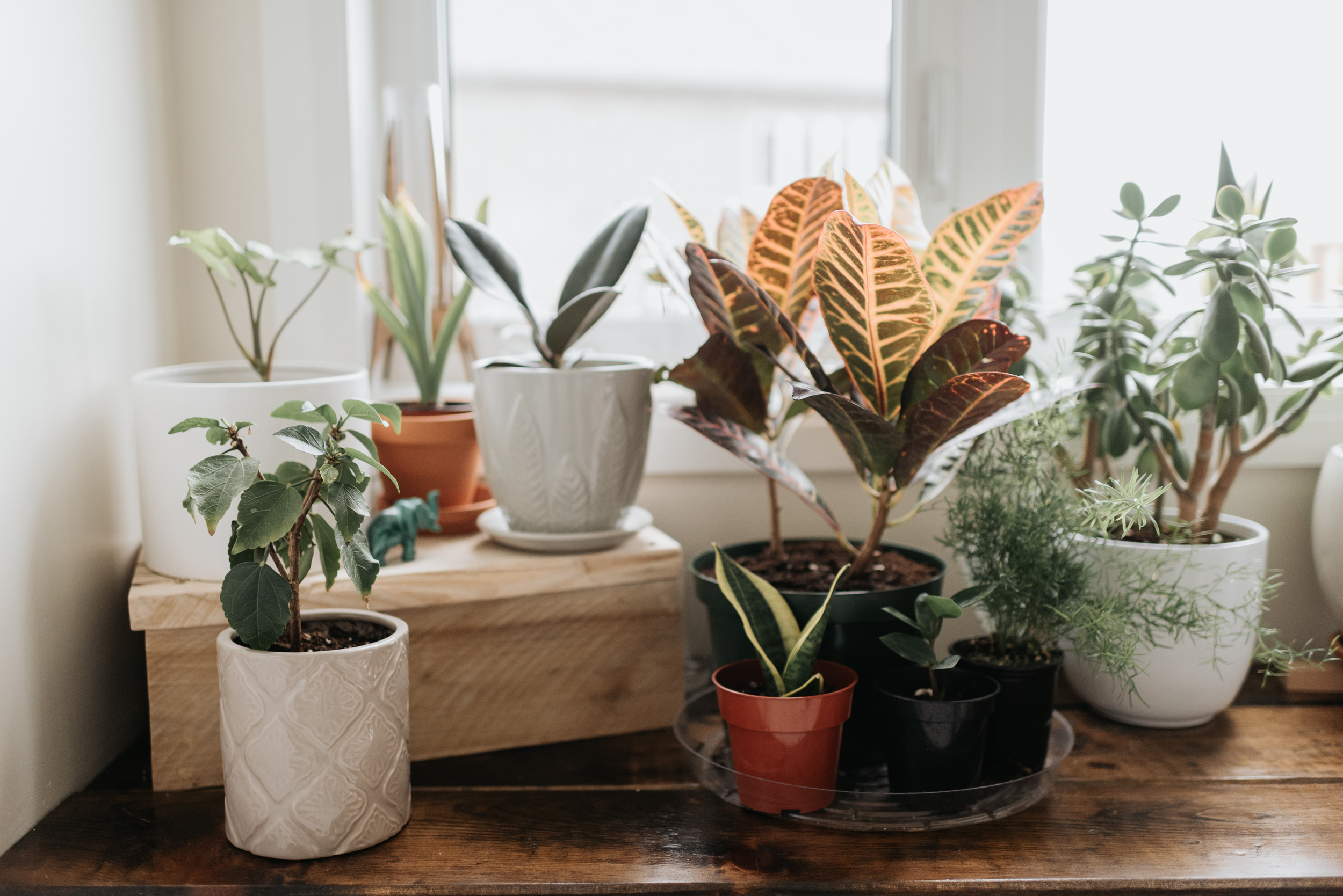 The 6 best indoor plants and how to care for them
