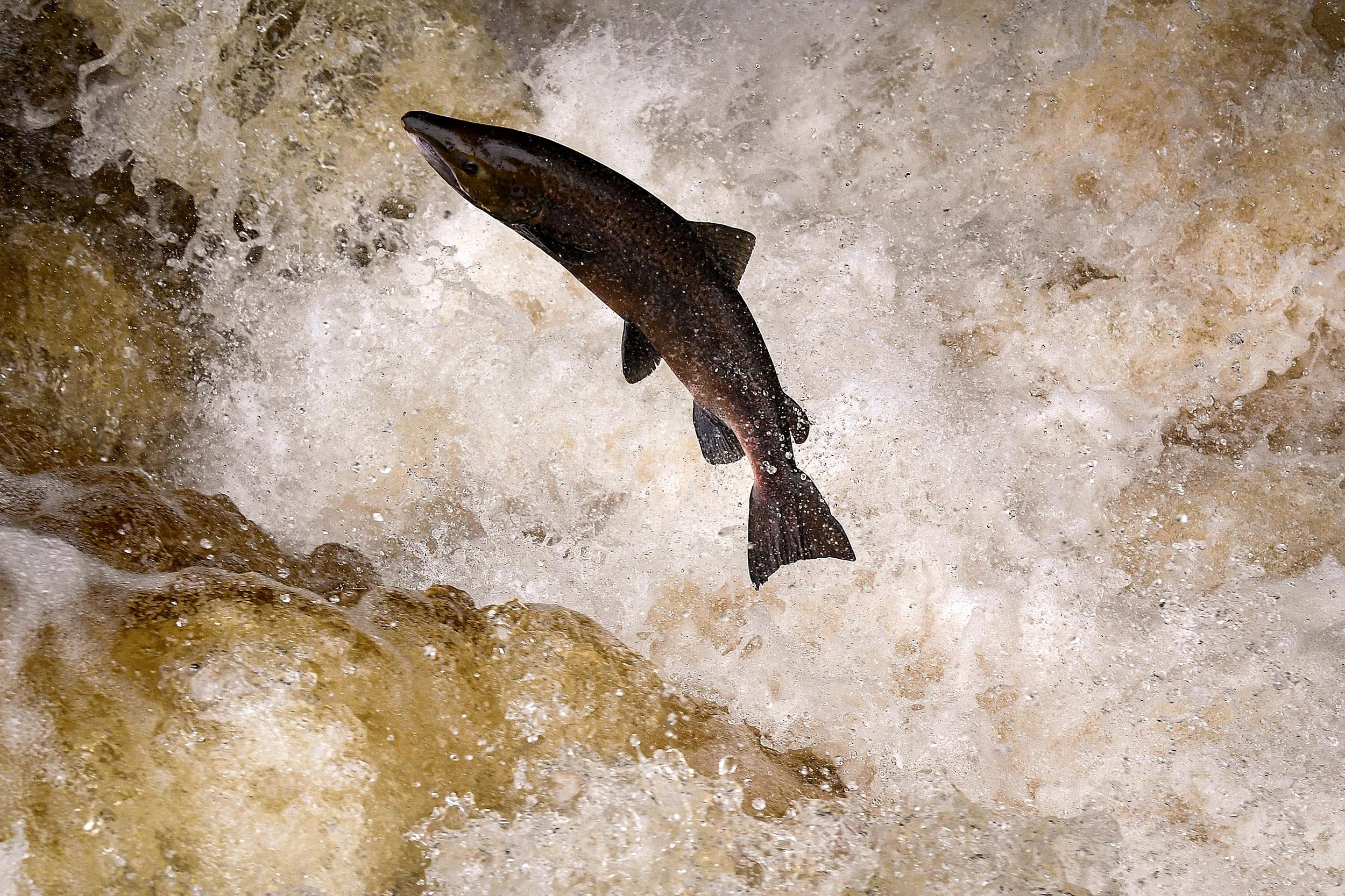 210223-freshwater-fish-mc-9572_6ebe44d3d