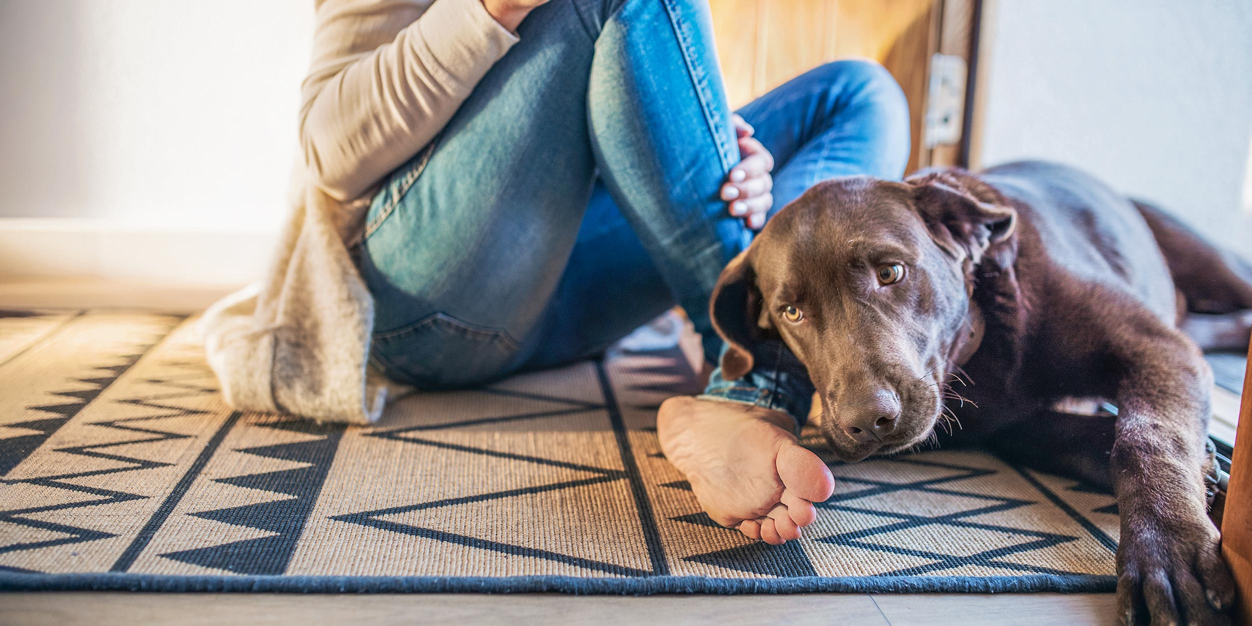 Top Rated Washable Rugs For Upgrading, Best Rugs For Living Room With Dogs