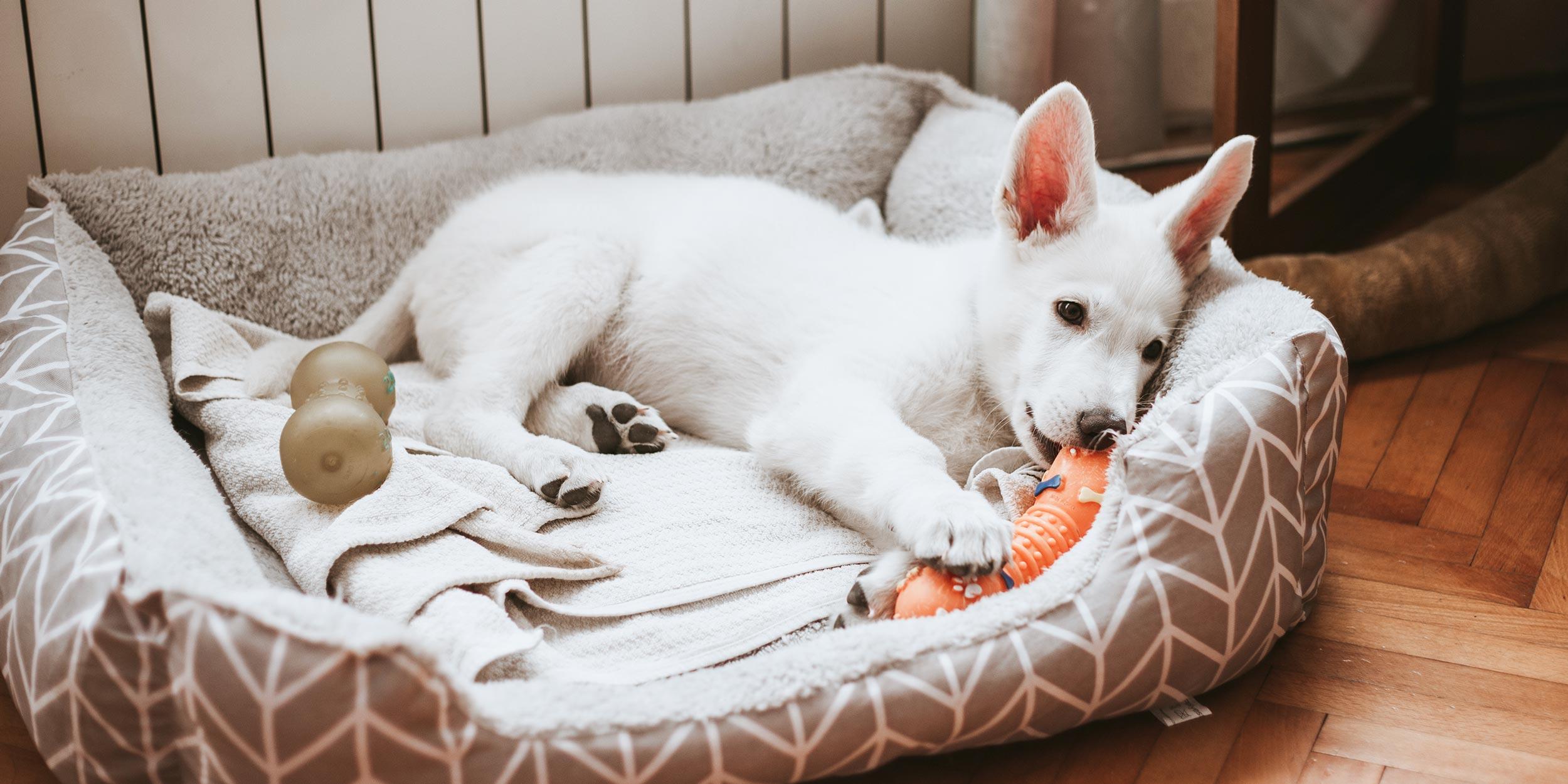 Dog Lover Gift Quick Release Pink Flower Dog Collar Medium Adjustable Size Collar Dog Mom Gift Washable Nylon Collar Girl Dog Collar