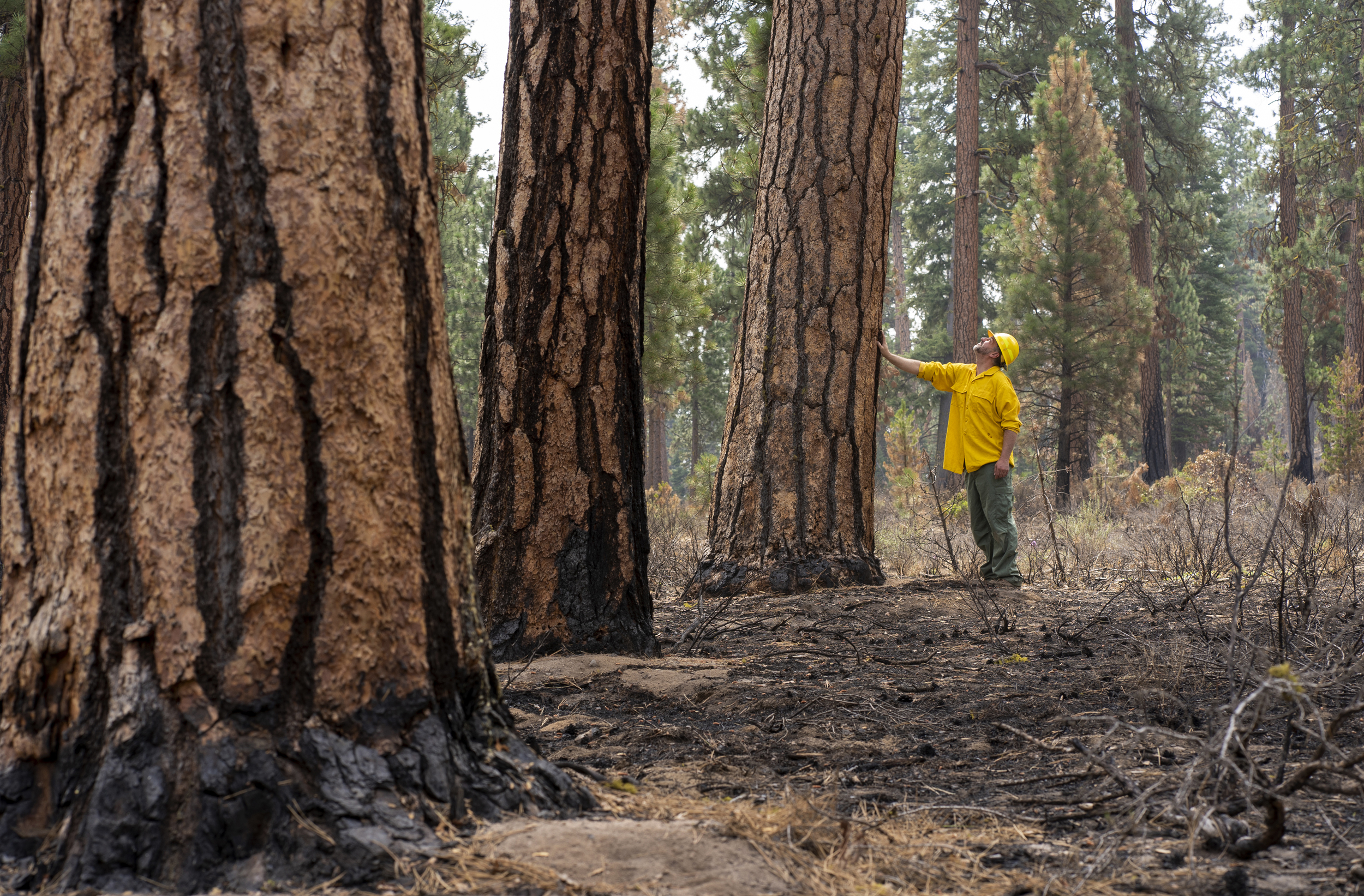 Oregon wildfire turns preserve into living lab, testing years of forest management