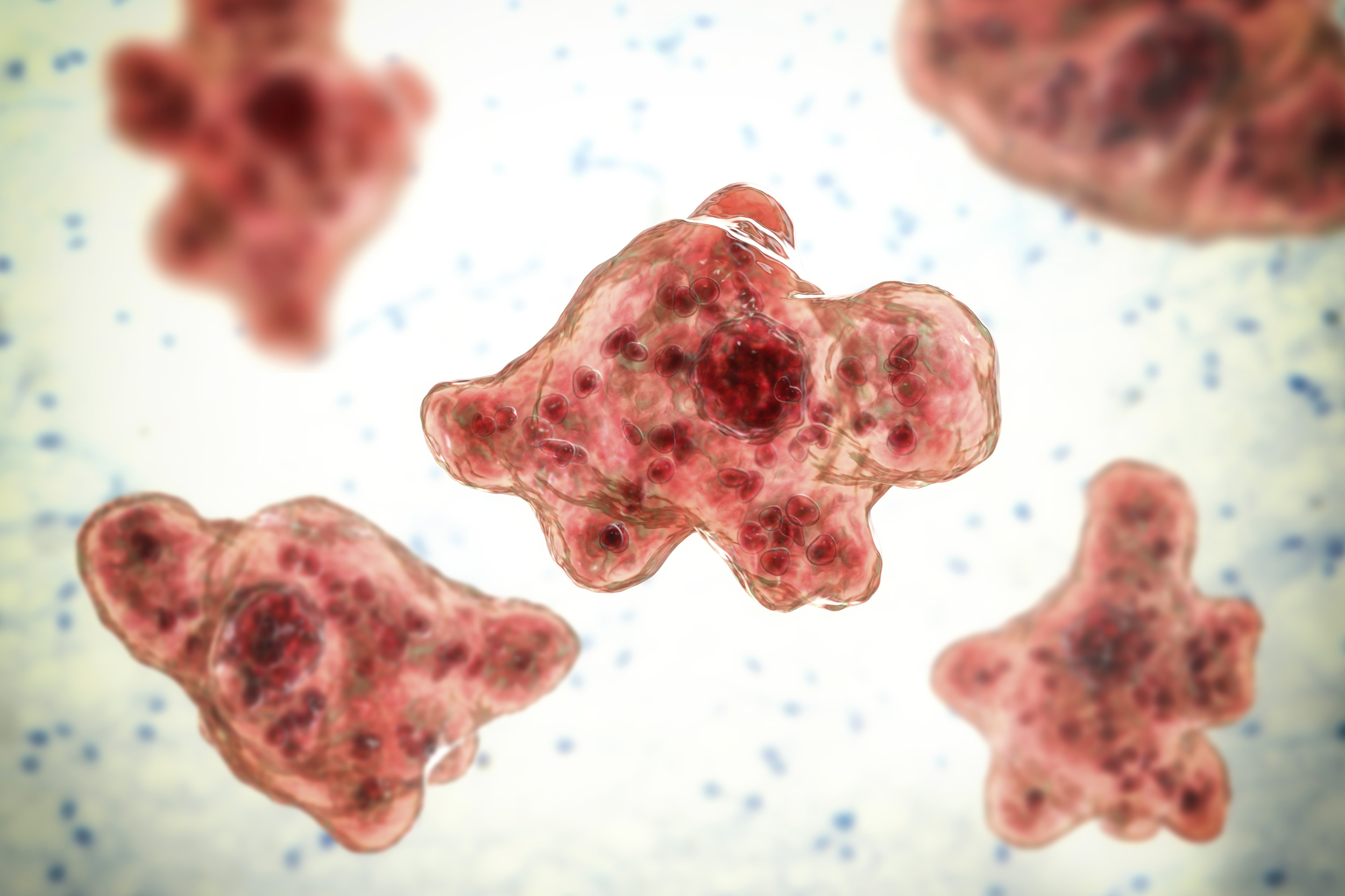 7-year-old boy dies from brain-eating amoeba in California, family says