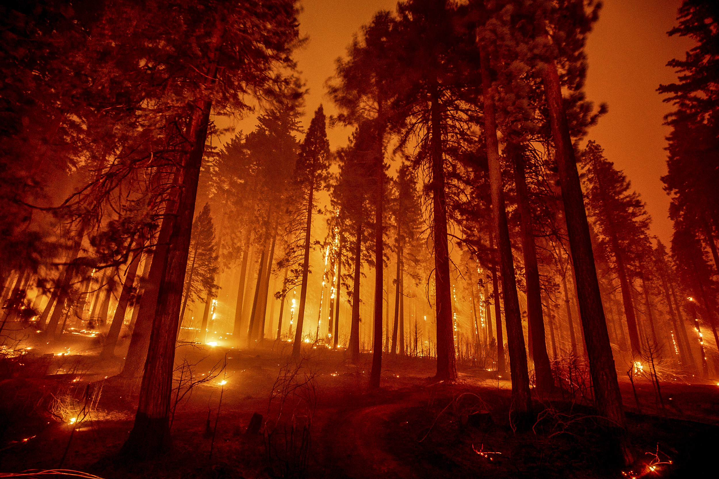 Caldor Fire explodes more than 8 times its size to nearly 54,000 acres in a day