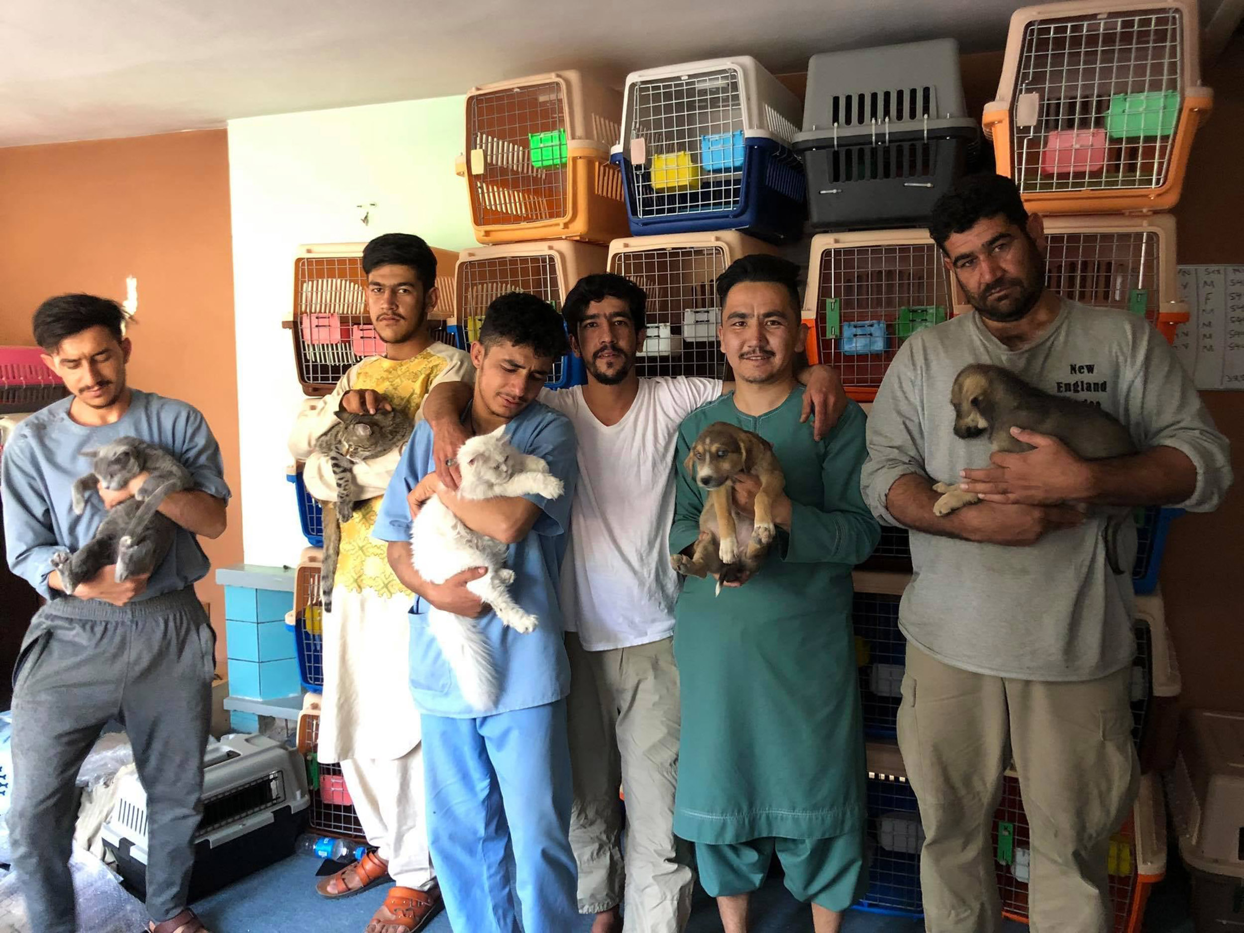'It would be like leaving my family': Animal rescue workers refuse to leave Afghanistan