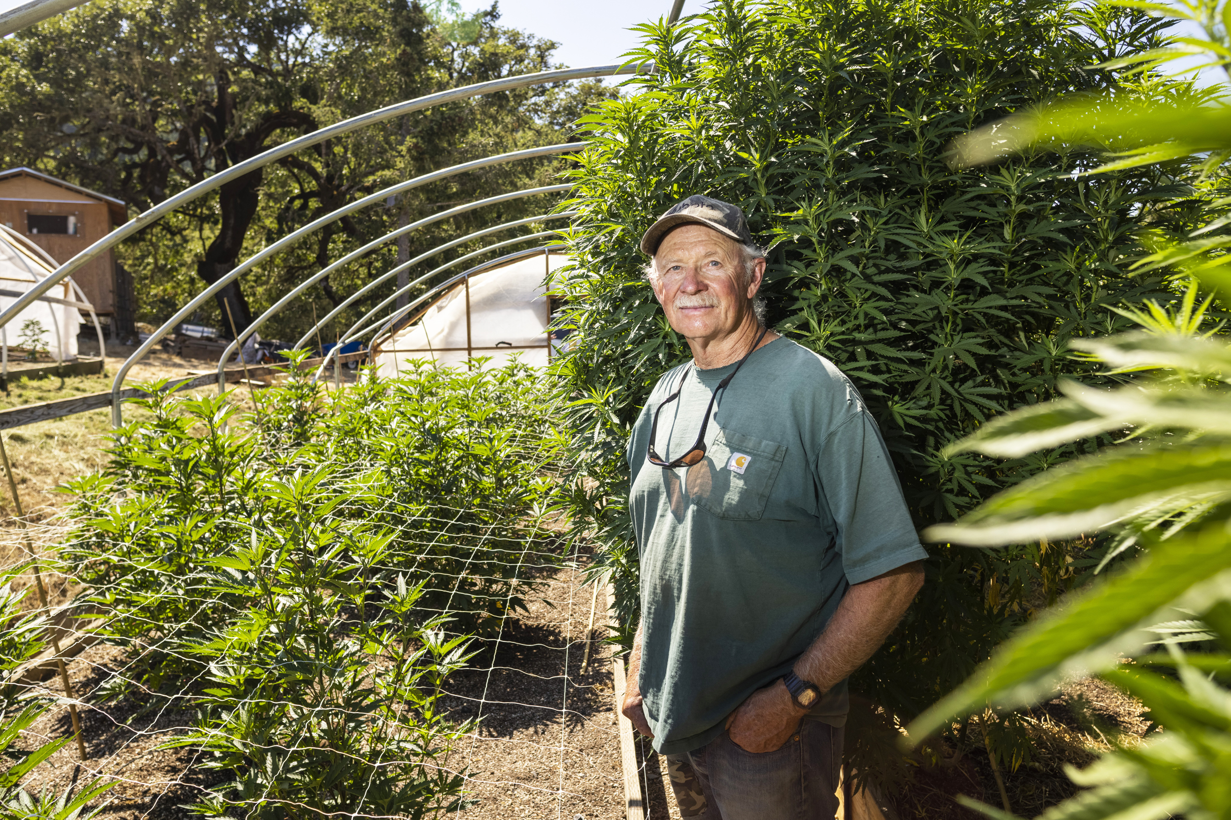 California cannabis growers face big threats. The potential damages go beyond the plant.