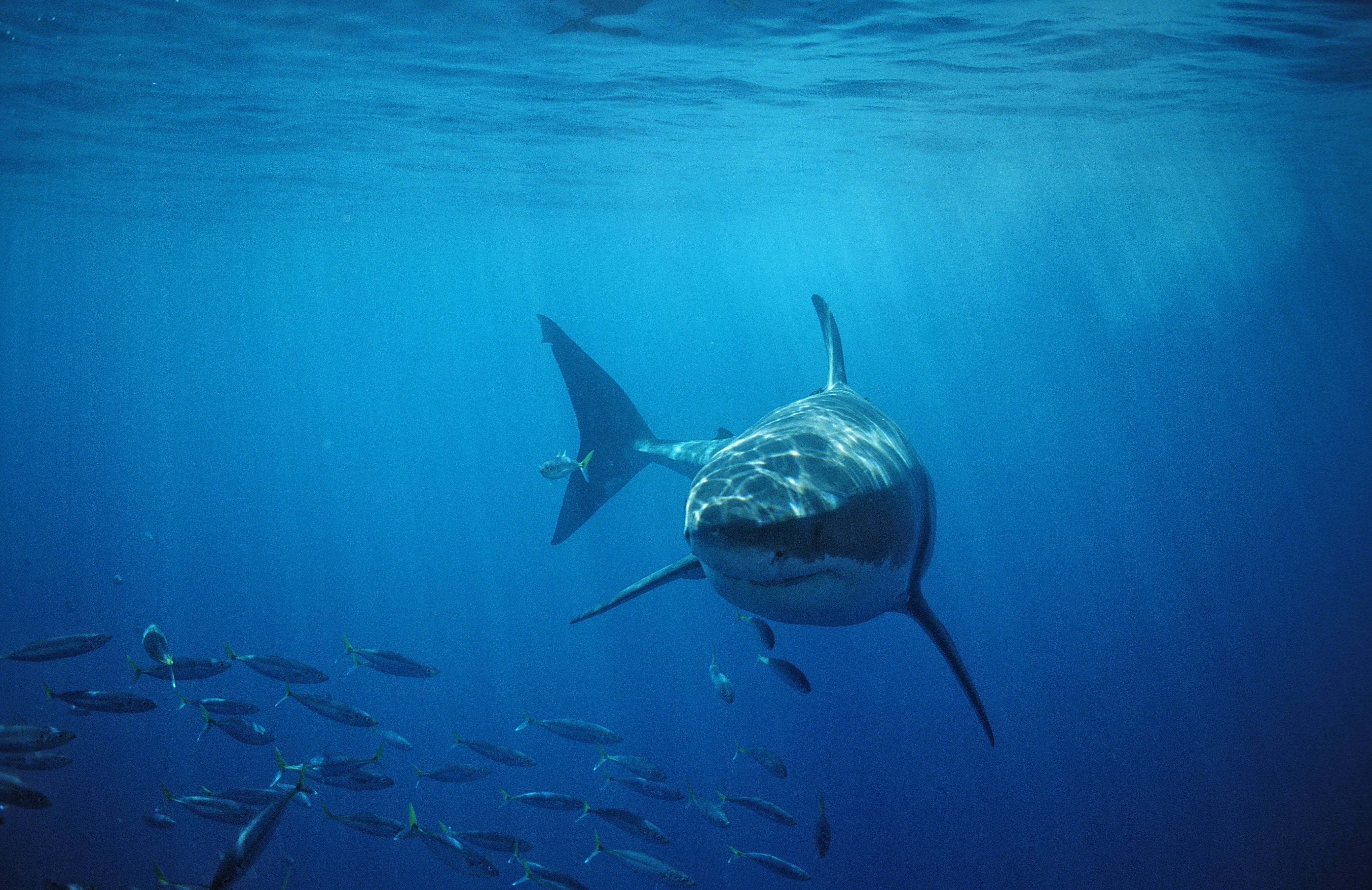 Shark attack kills surfer off Australia's east coast