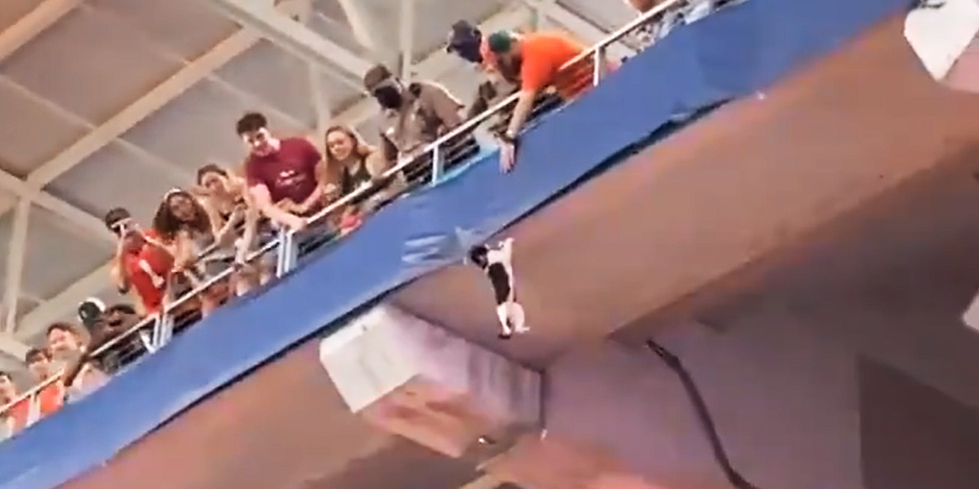 Video shows football fans in Florida rescue dangling cat that fell from upper deck