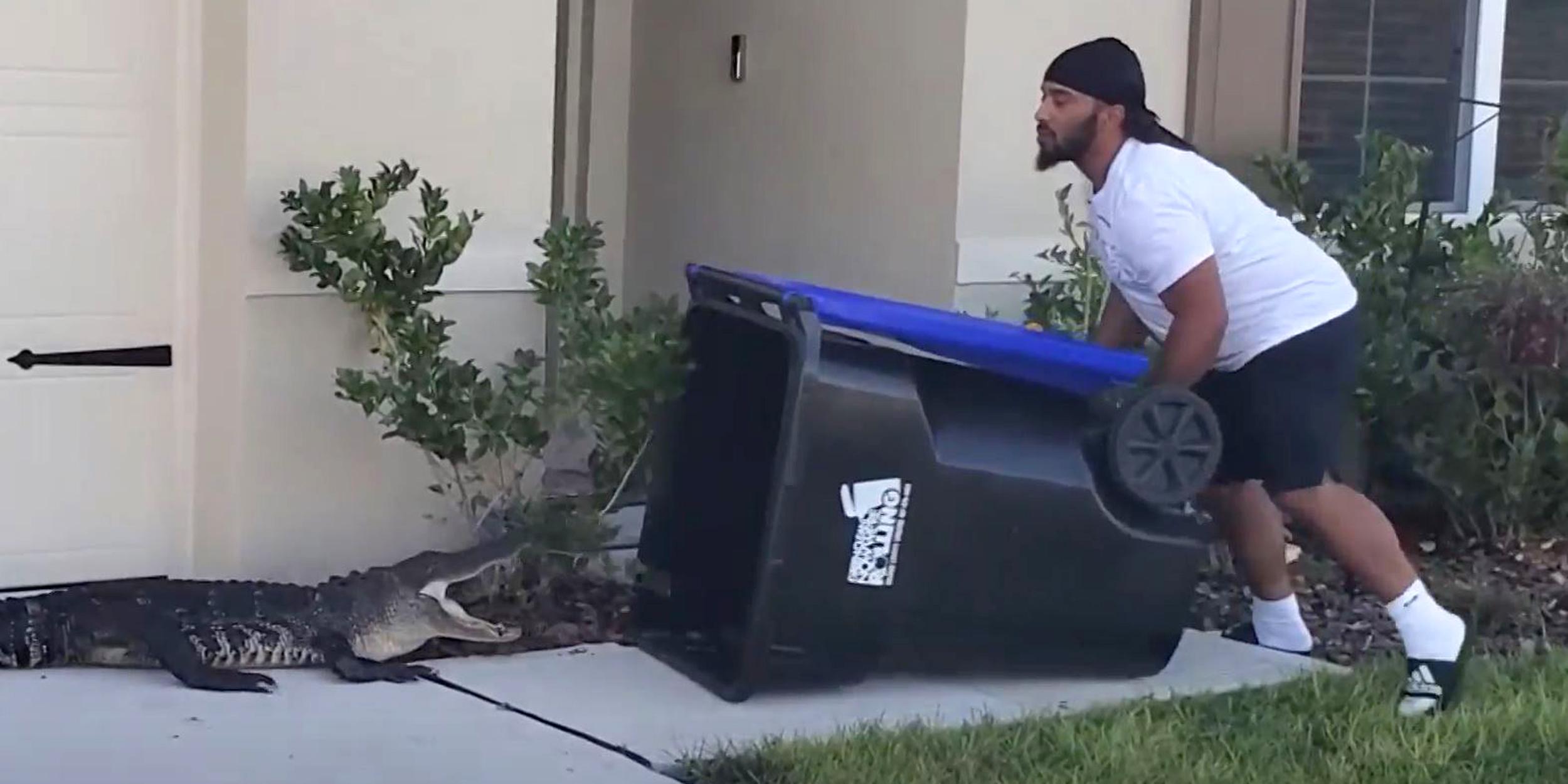Wild video shows Florida man trapping alligator in a garbage bin
