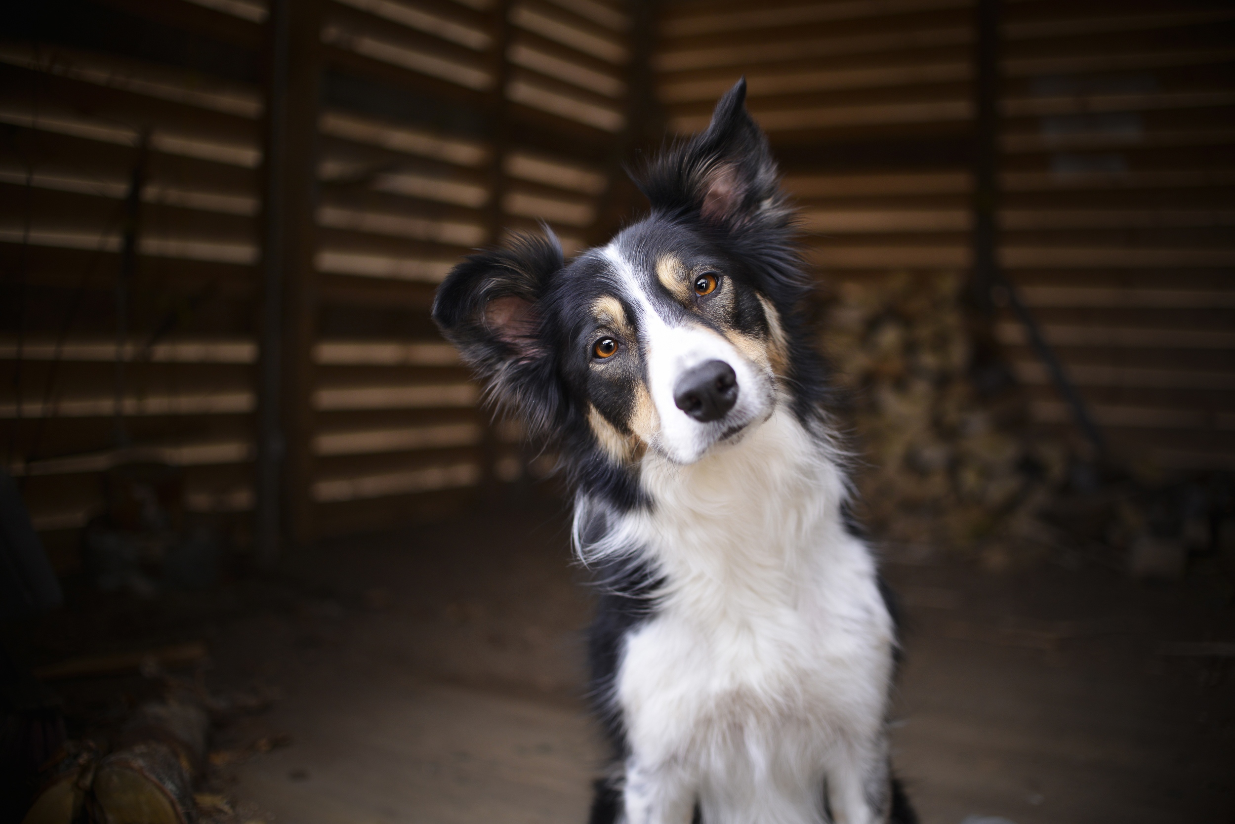 How smart is your dog? Hungarian experiment puts one breed to the test