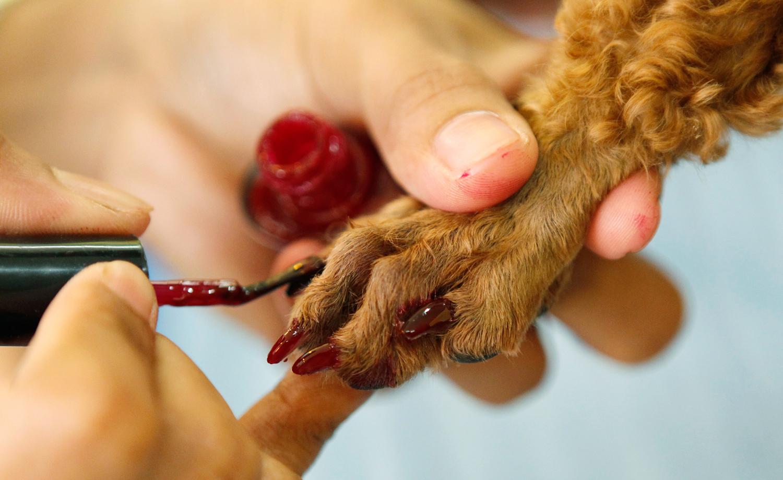 Фото кошачьих лап с маникюром