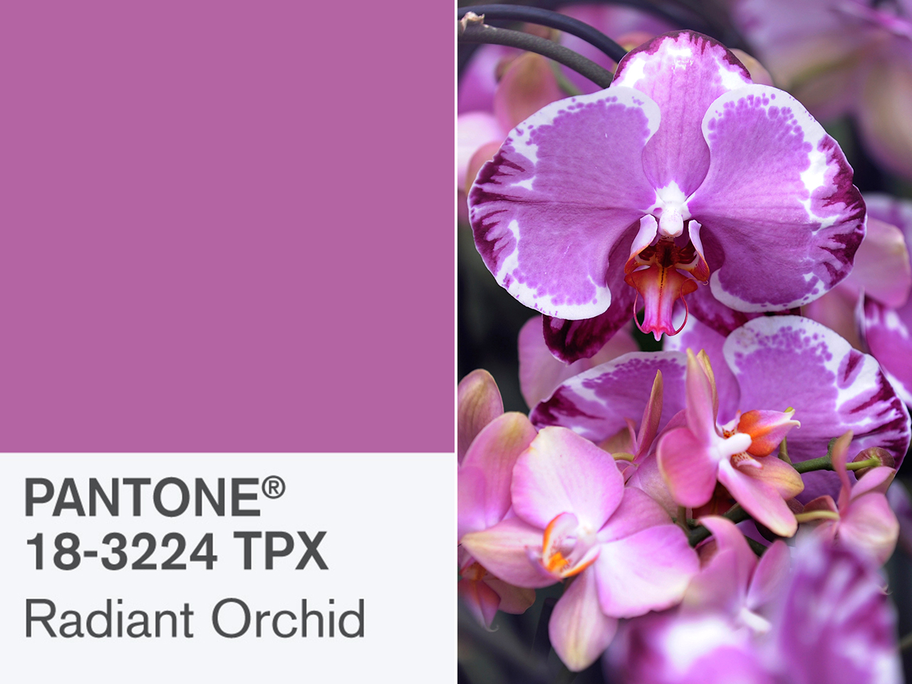 Pantone's Radiant Orchid is 2014's Color of the Year ...