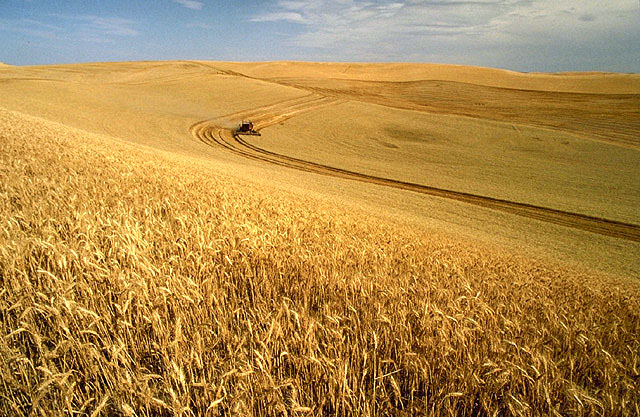Wheat fields in Eastern Washington