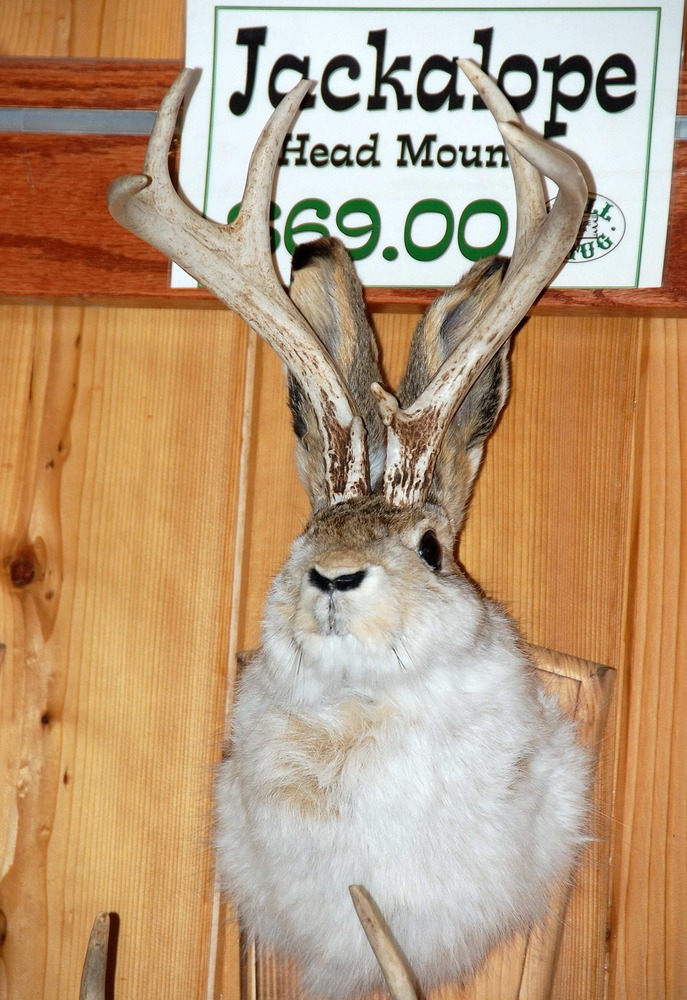 In this photo taken on May 6, 2009, a mythical jackalope is seen on display at Wall Drug, in Wall, S.D. (AP Photo/Carson Walker)