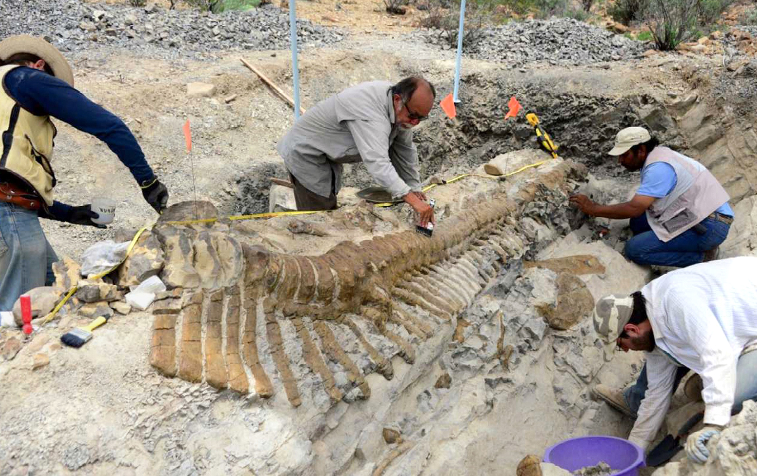 Undated handout picture released by the National Institute of History and Anthropology (INAH) showing paleontologists working in the excavation of a d...