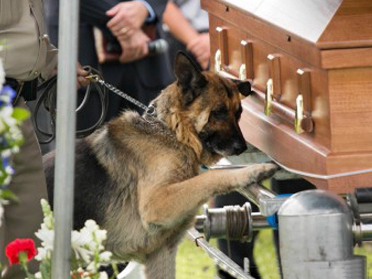 Canadian Veteran Service Dog Unit