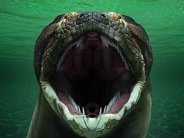 Image: Super-snake