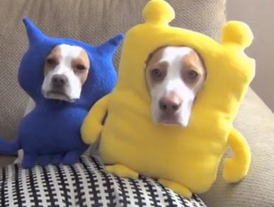 Dog-shaming screenshot from video