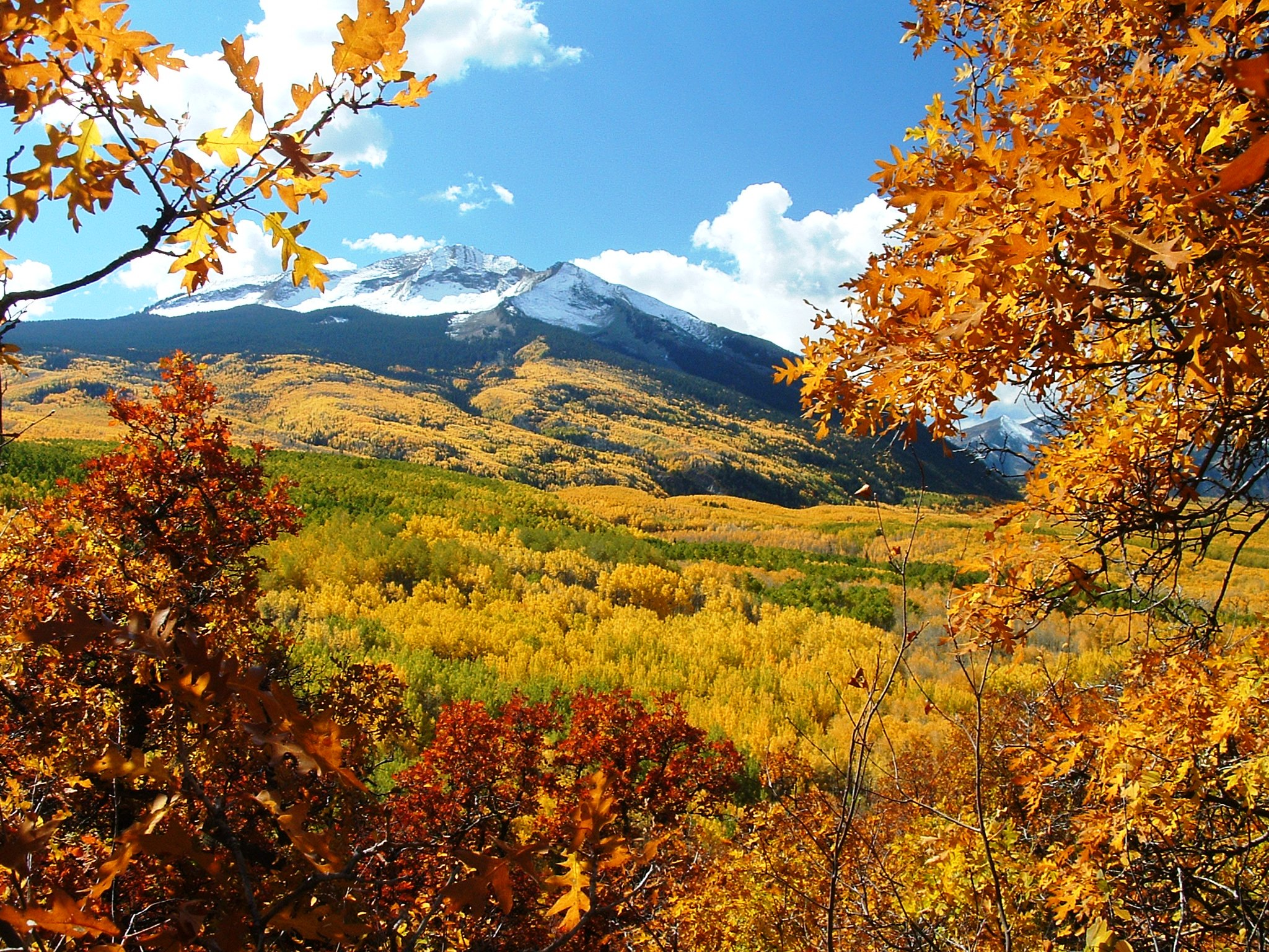 Come see beautiful fall foliage on Kebler Pass near Crested Butte in Colorado.