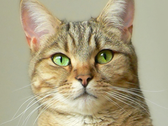 cat housecat featurepics stock msnbc.com photography