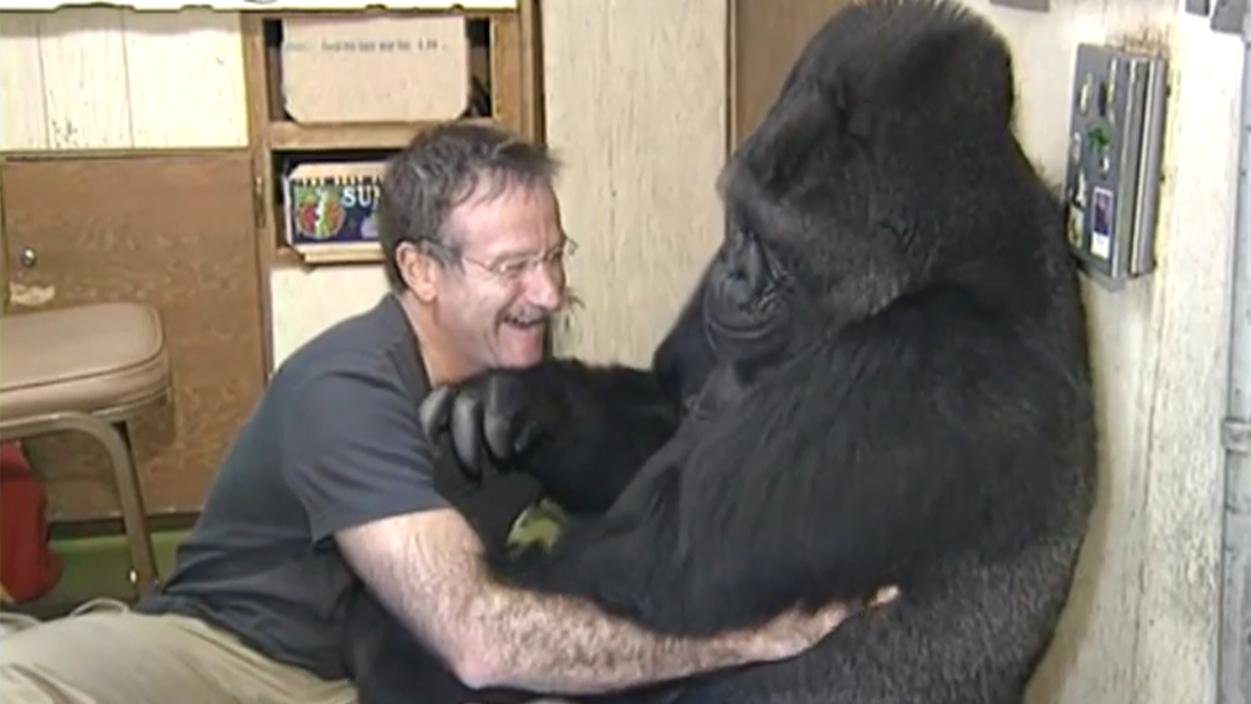 Robin Williams mourned by Koko the gorilla
