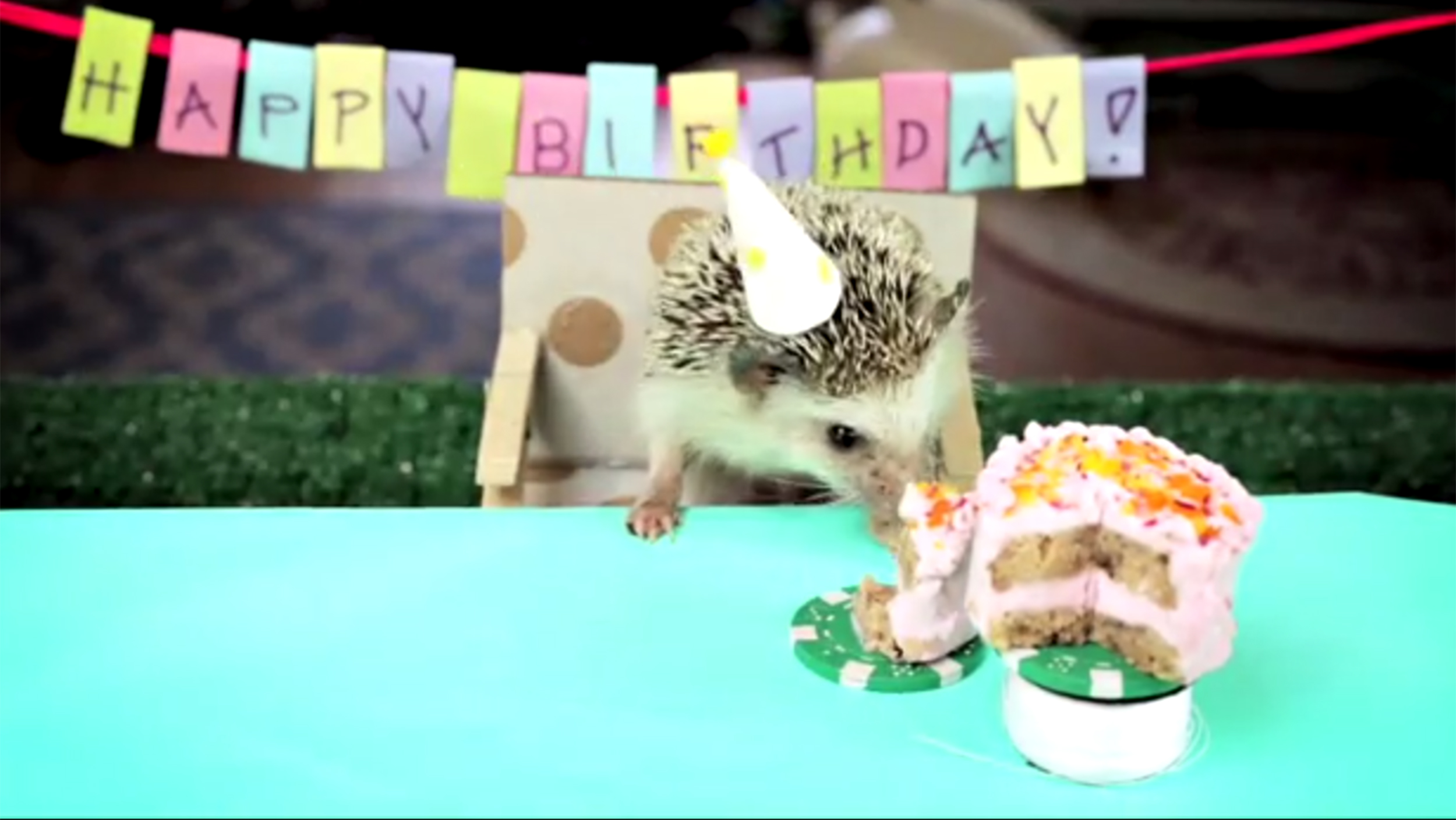 Поздравление с днем рождения, Ёжик и Ромашки День рождения 1
