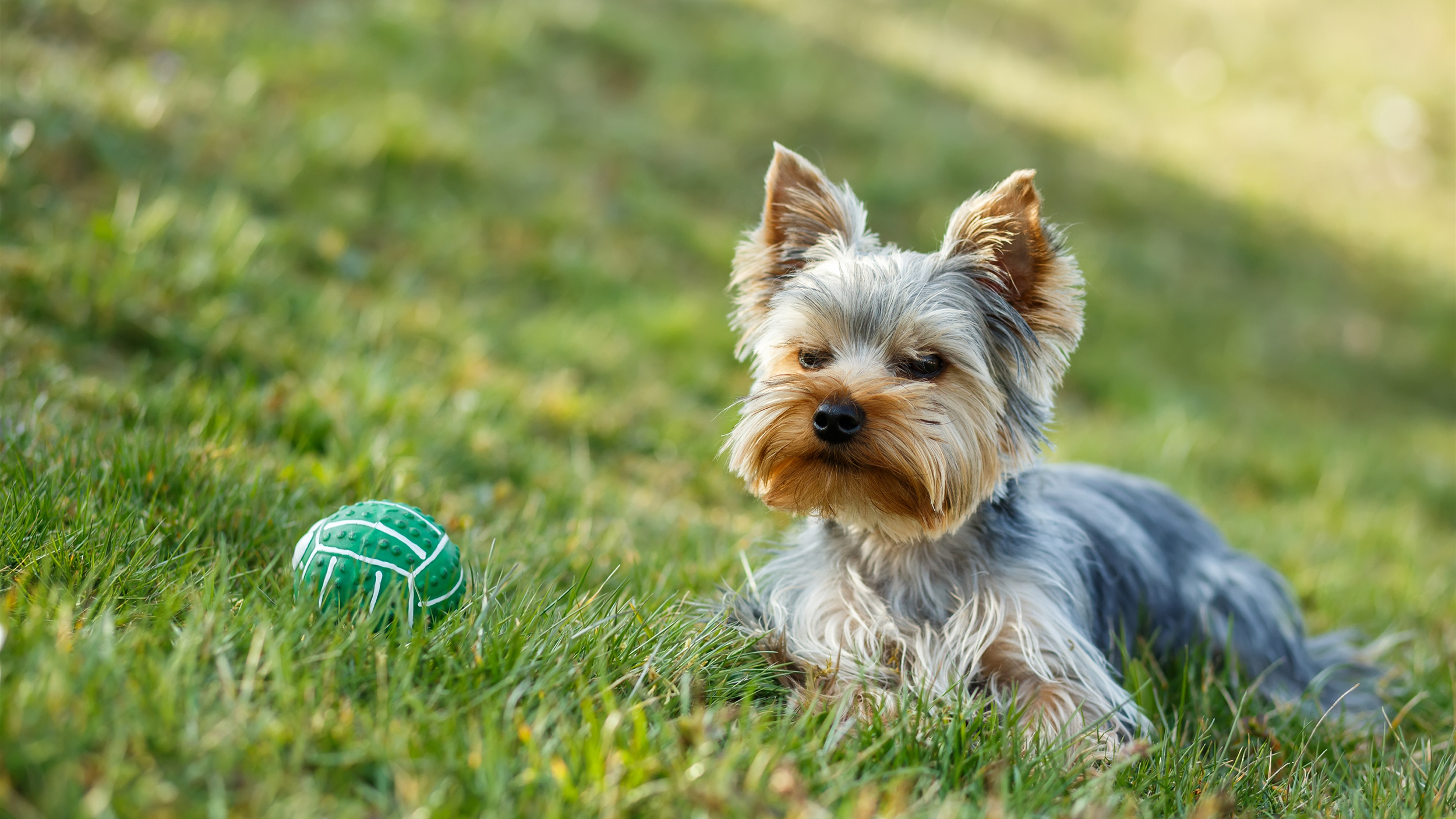 Dog eating the grass? 6 ways to pet proof your lawn and ...