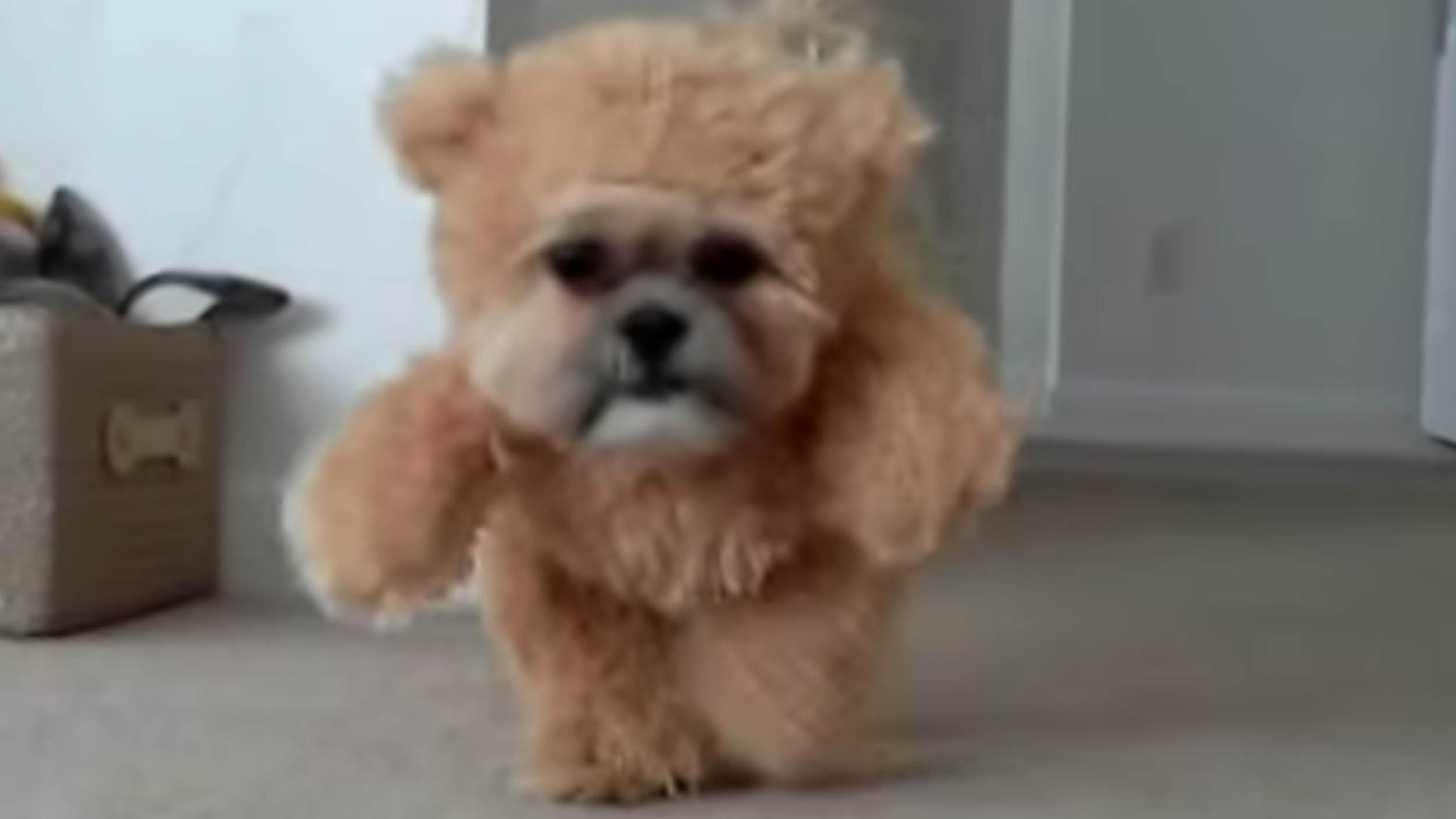 Ewok Dog Costume Video