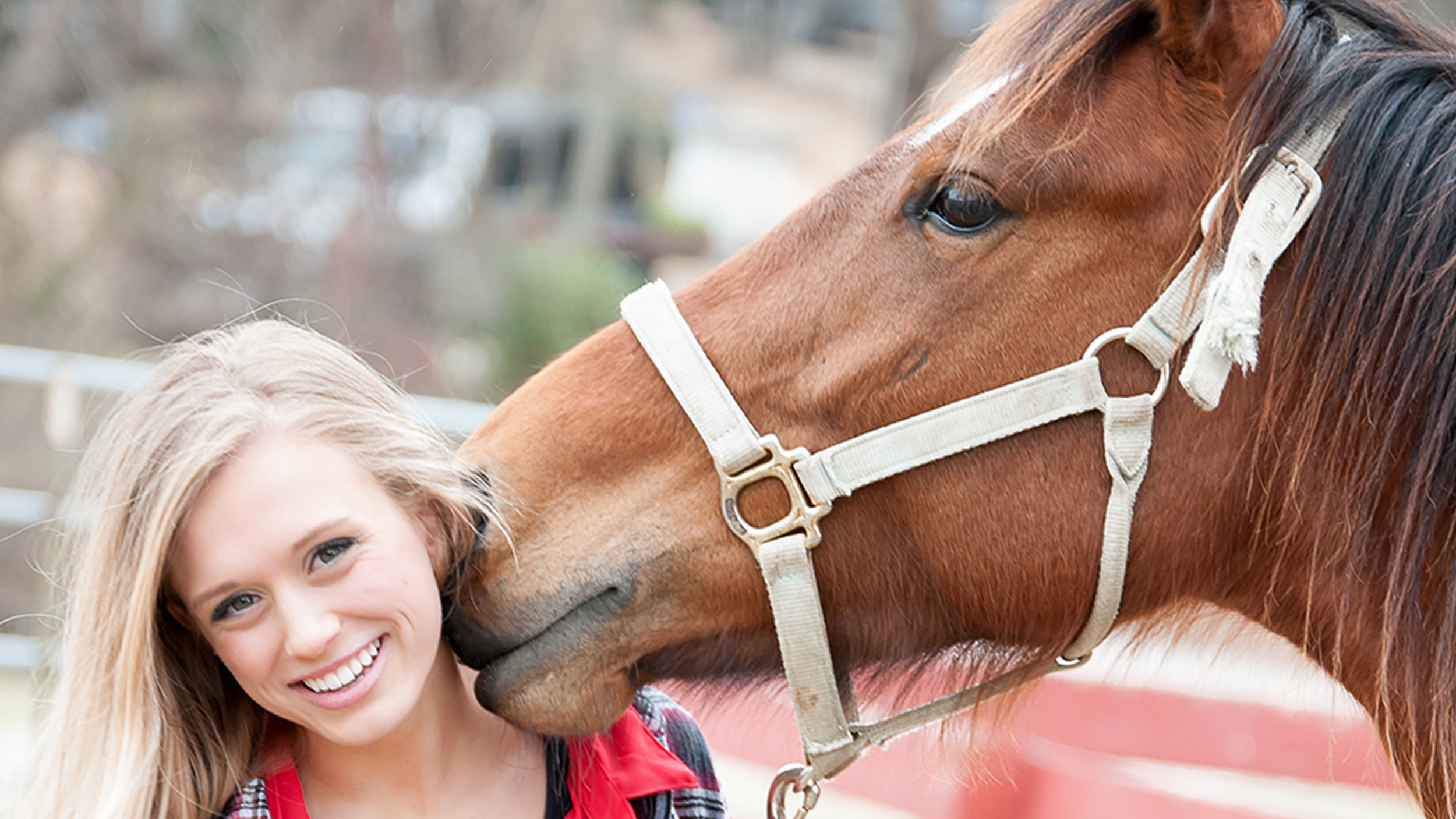 The Pegasus Project Rescues Horses While Helping Humans