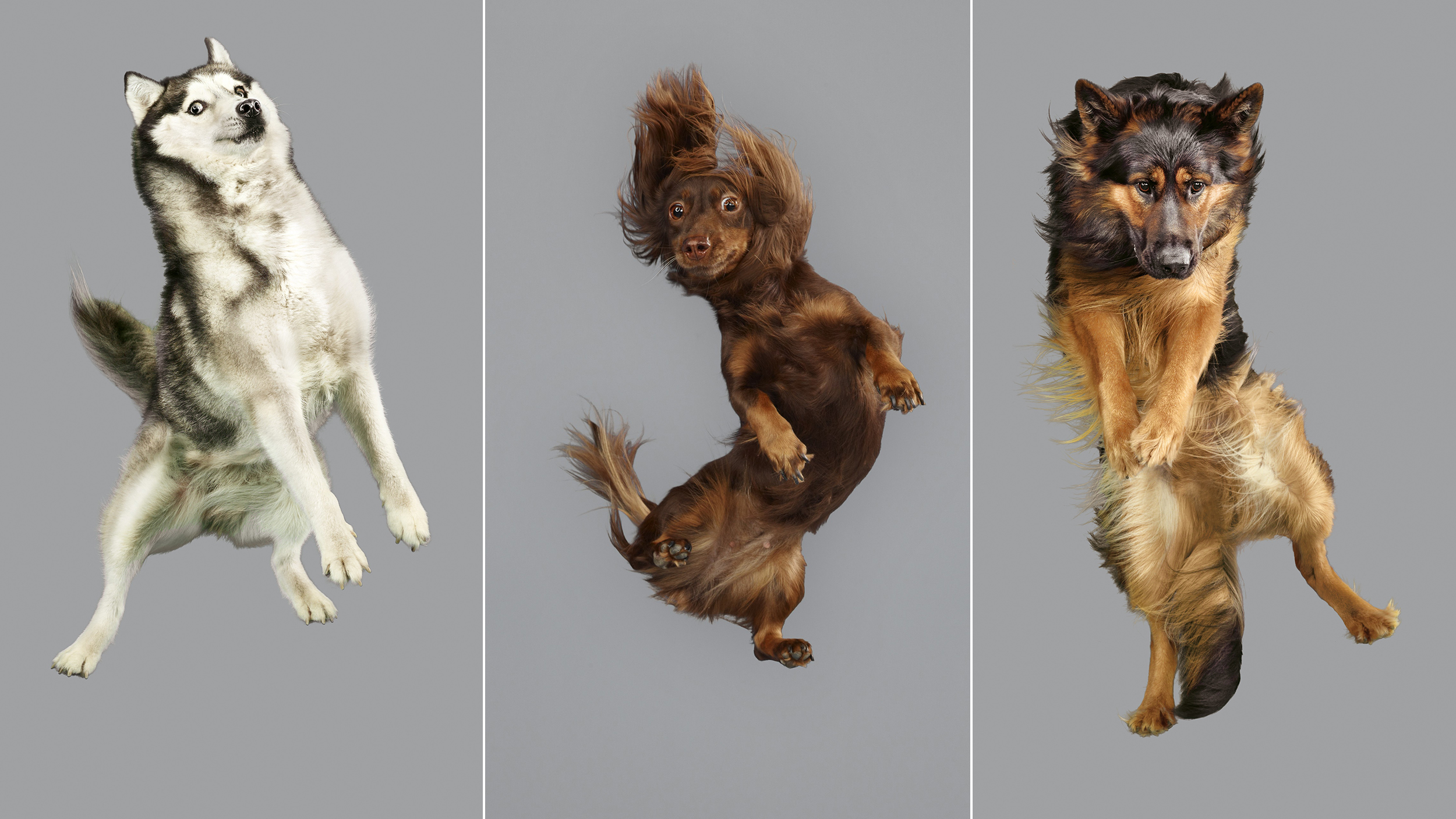 Dogs take flight in hilarious photos for Best airline to fly dogs