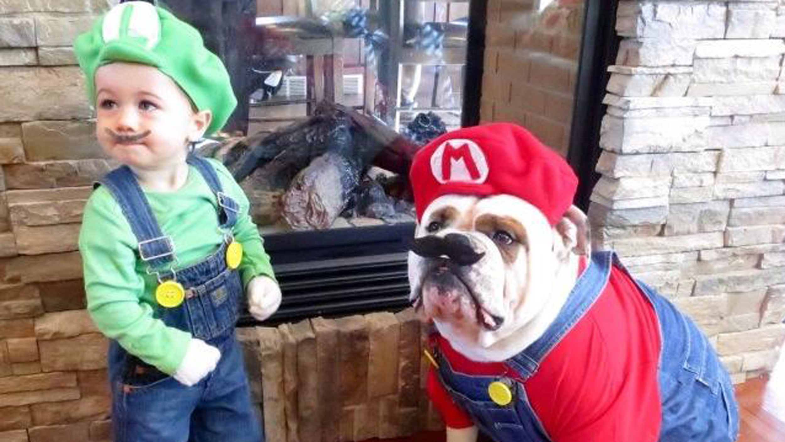 Cute Pet Costumes For Halloween Today Com