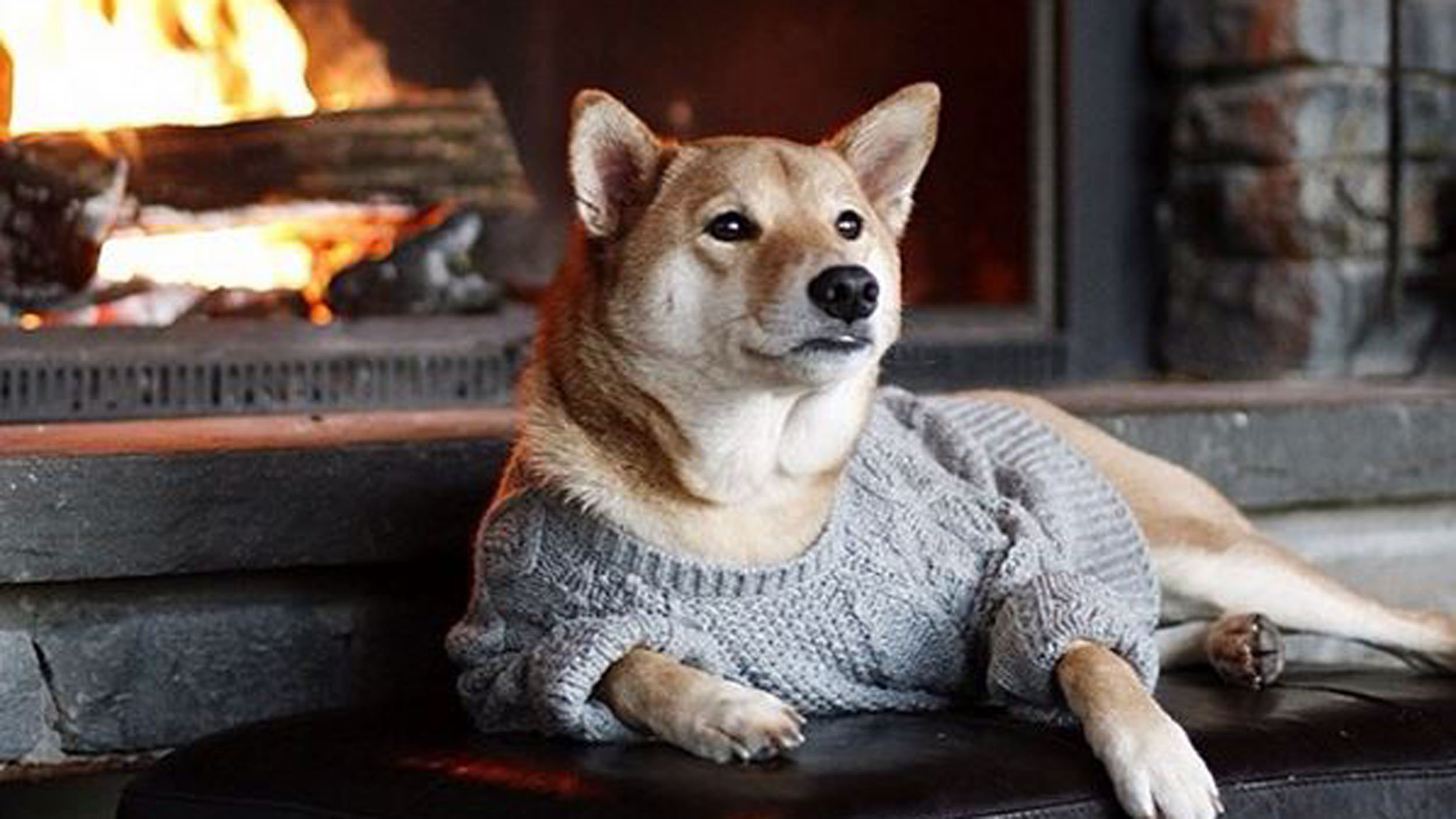 Why Bodhi, the Menswear Dog, makes more money than you