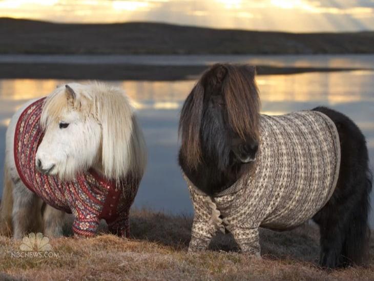 Scotland ponies dressed to impress - Video on NBCNews.com
