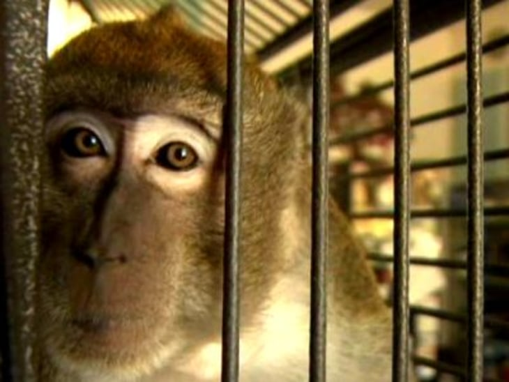 Pet monkey attacks owner during shared nap - Video on
